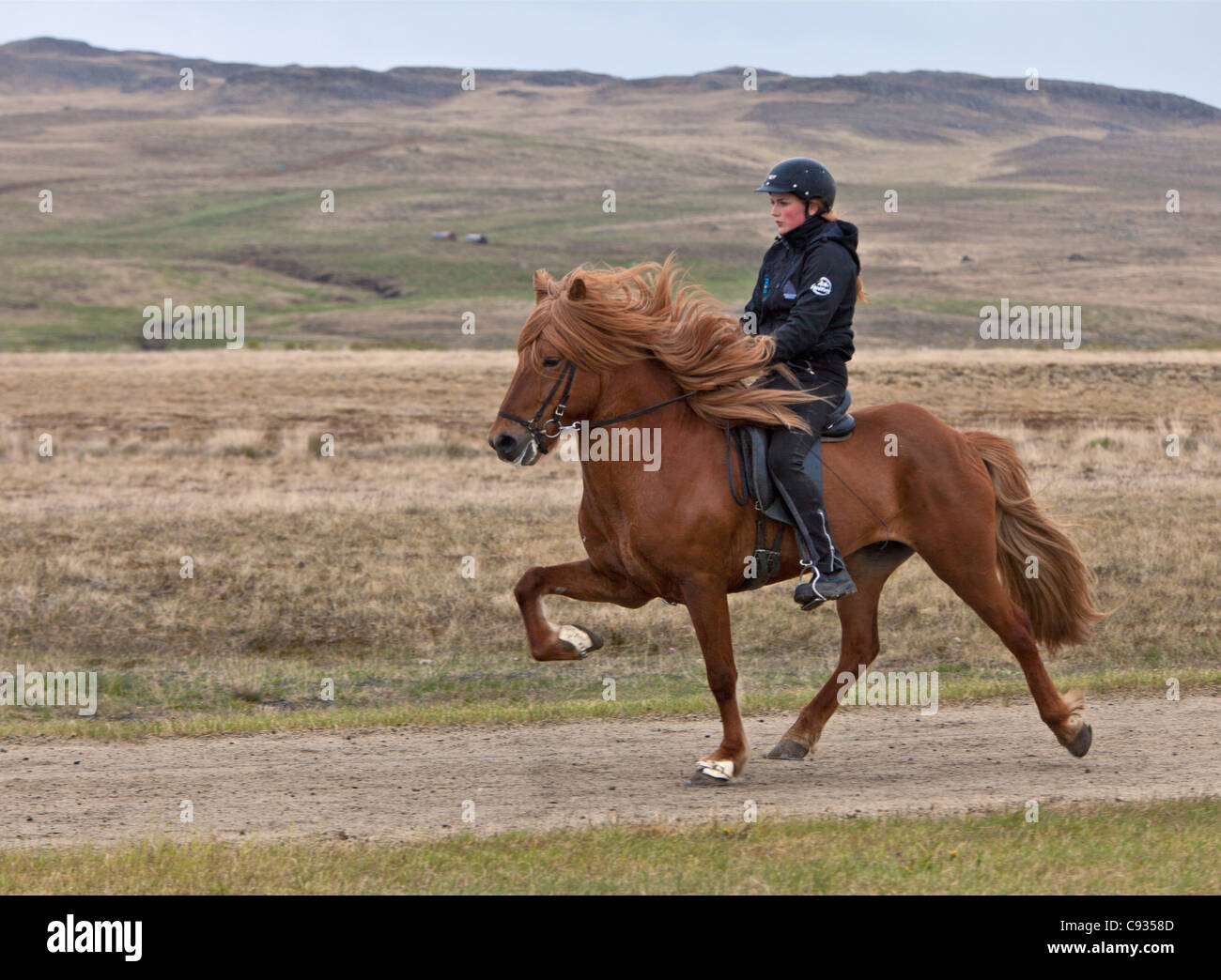 A horsewoman riding her Icelandic horse with the prancing high-step gait called tolt. - Stock Image