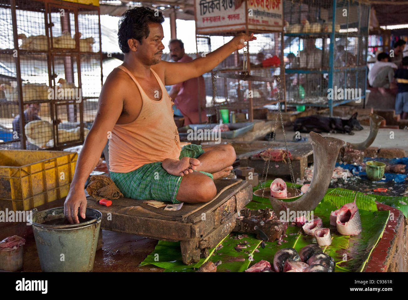 A fishmonger weighs a fish steak in Kalna market.  All the fish are caught in the nearby Hooghly River. - Stock Image
