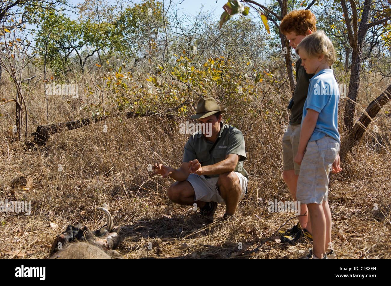 Malawi, Majete Wildlife Reserve.  Safari guide showing a warthog carcass on a family safari. - Stock Image