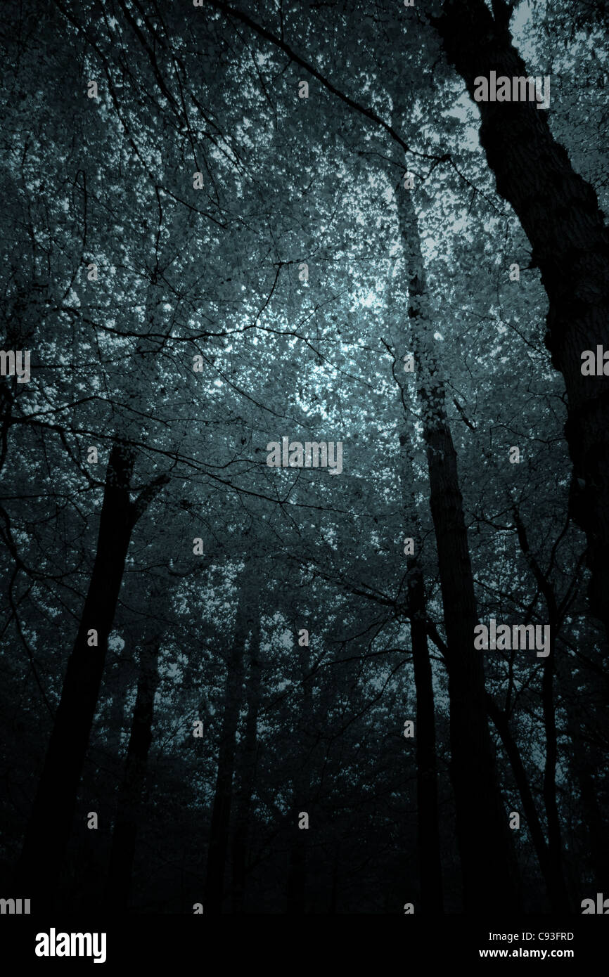 Creepy Forest Stock Photos Amp Creepy Forest Stock Images