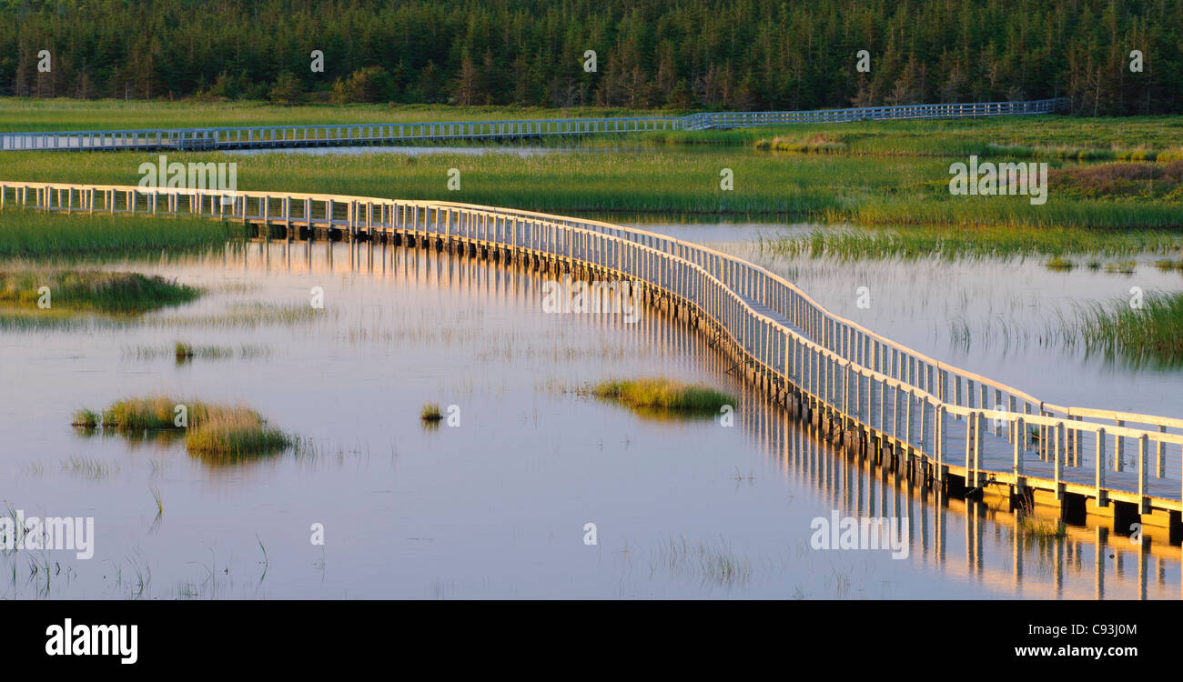 Boardwalk trail across wetlands at Greenwich, Prince Edward Island National Park, PEI, Canada. - Stock Image