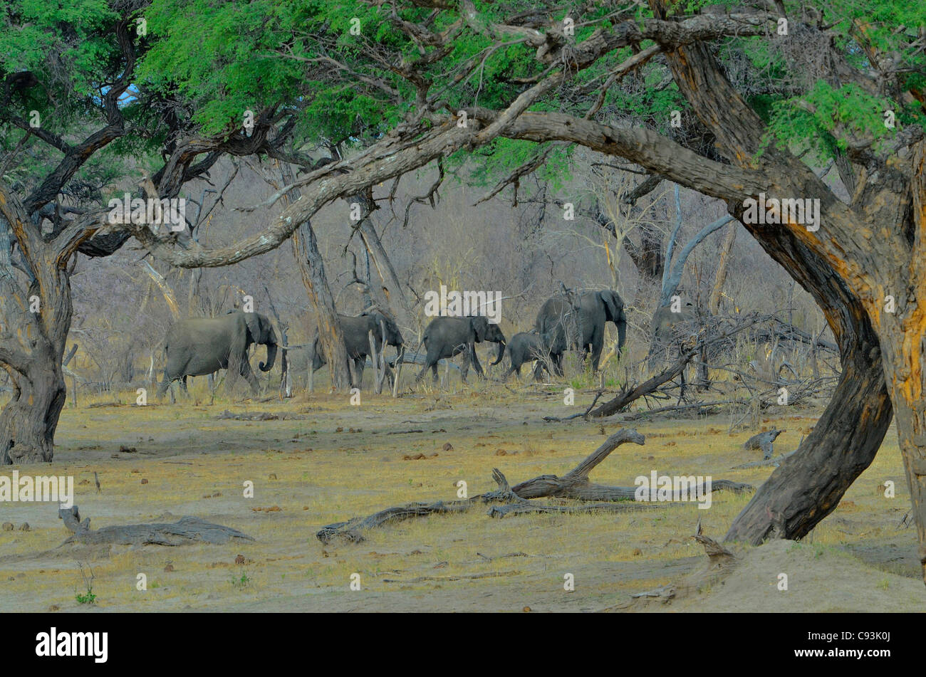 Zimbabwe is a small country boasting an incredible variety of landscapes and animals. Stock Photo