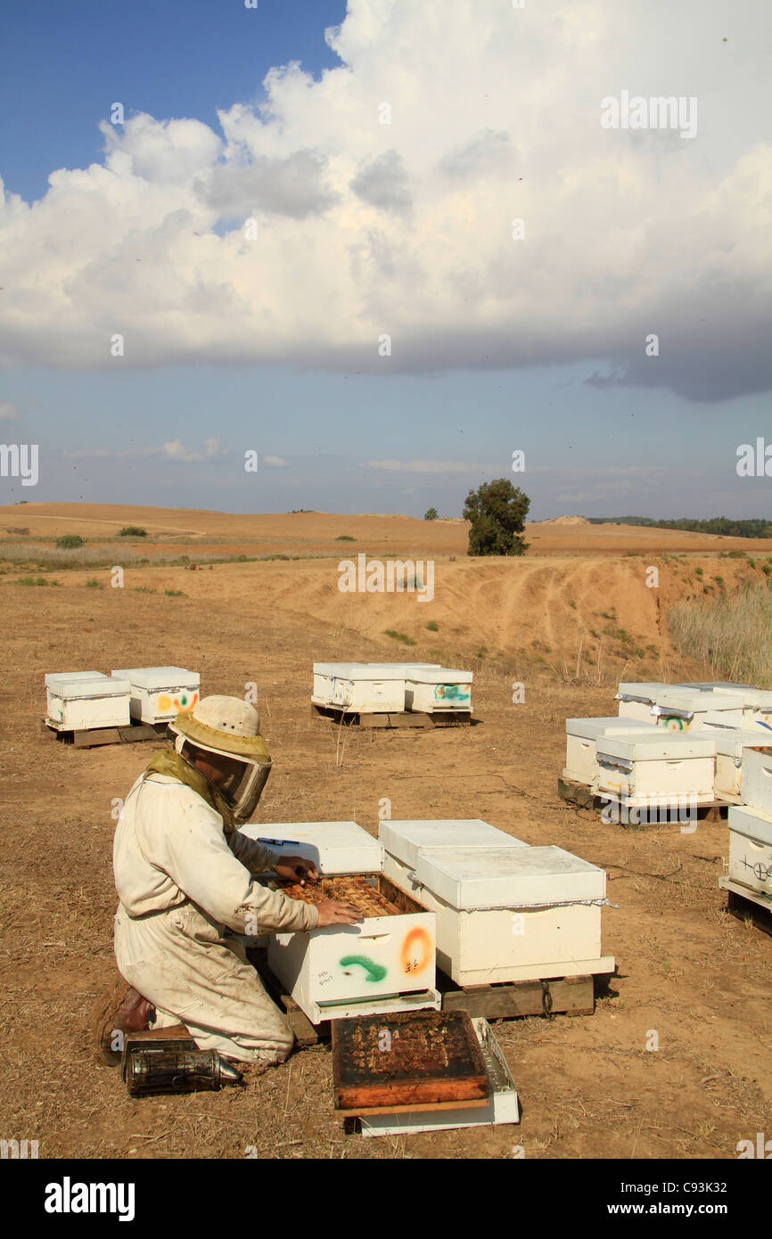 Israel, Bee hives in the Northern Negev - Stock Image