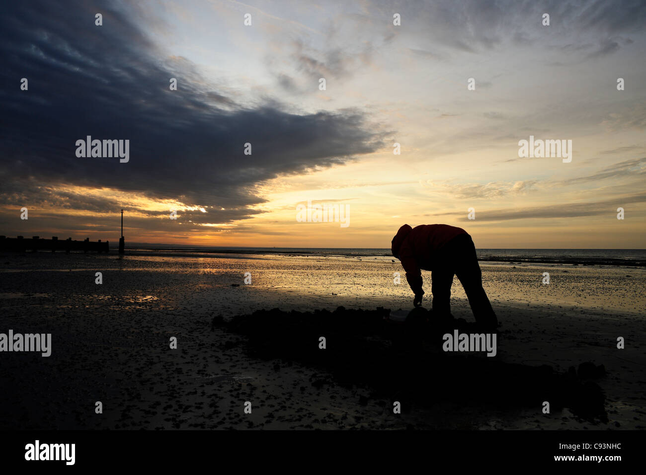 Digging for lugworms on Worthing beach at sunrise - Stock Image