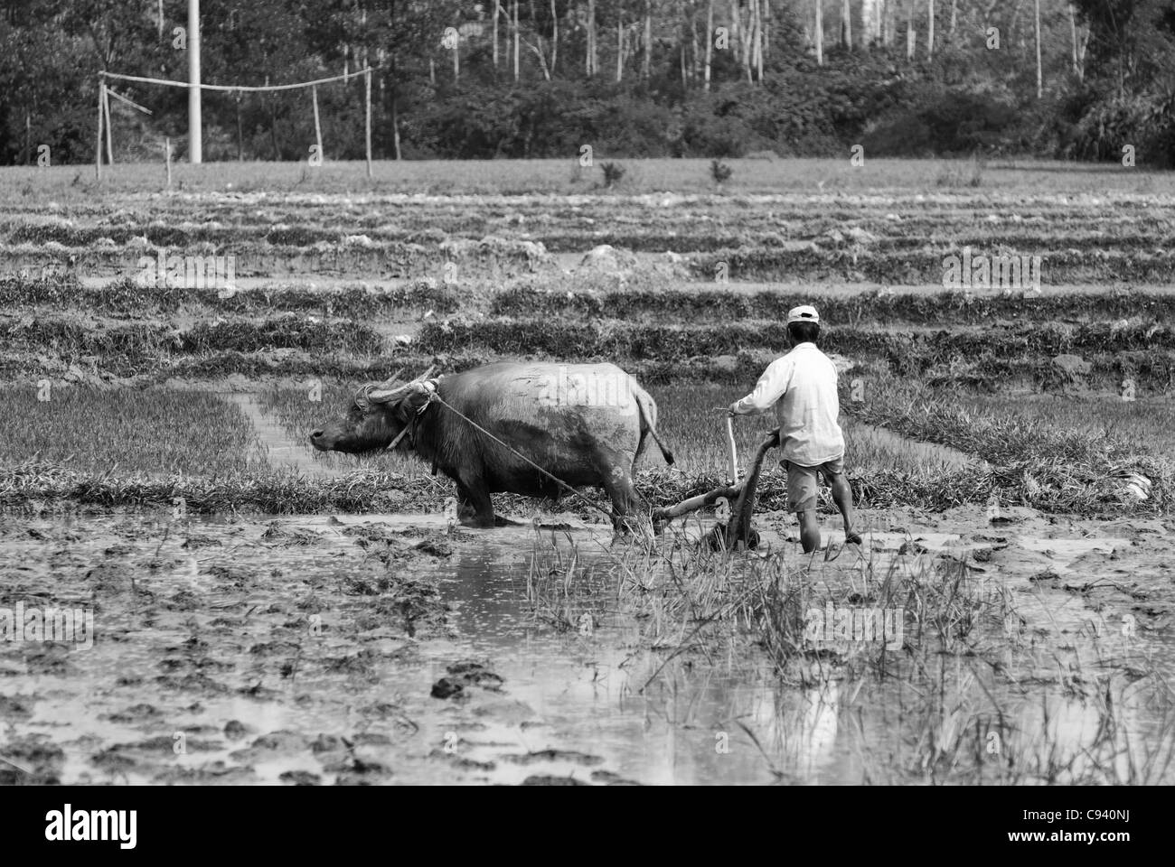 Asia, Vietnam, Hue. Vietnamese farmer working in the field. - Stock Image