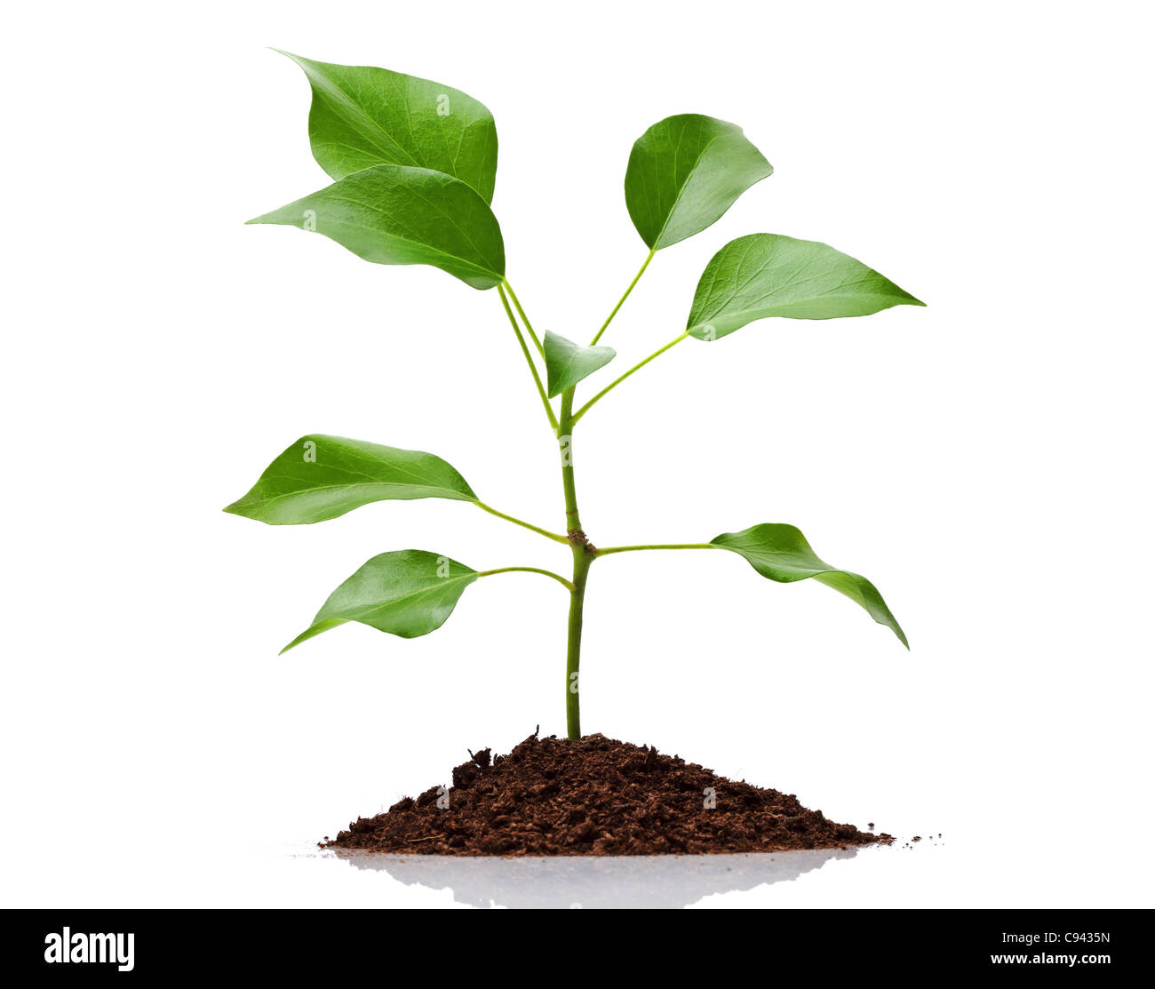New life - Stock Image