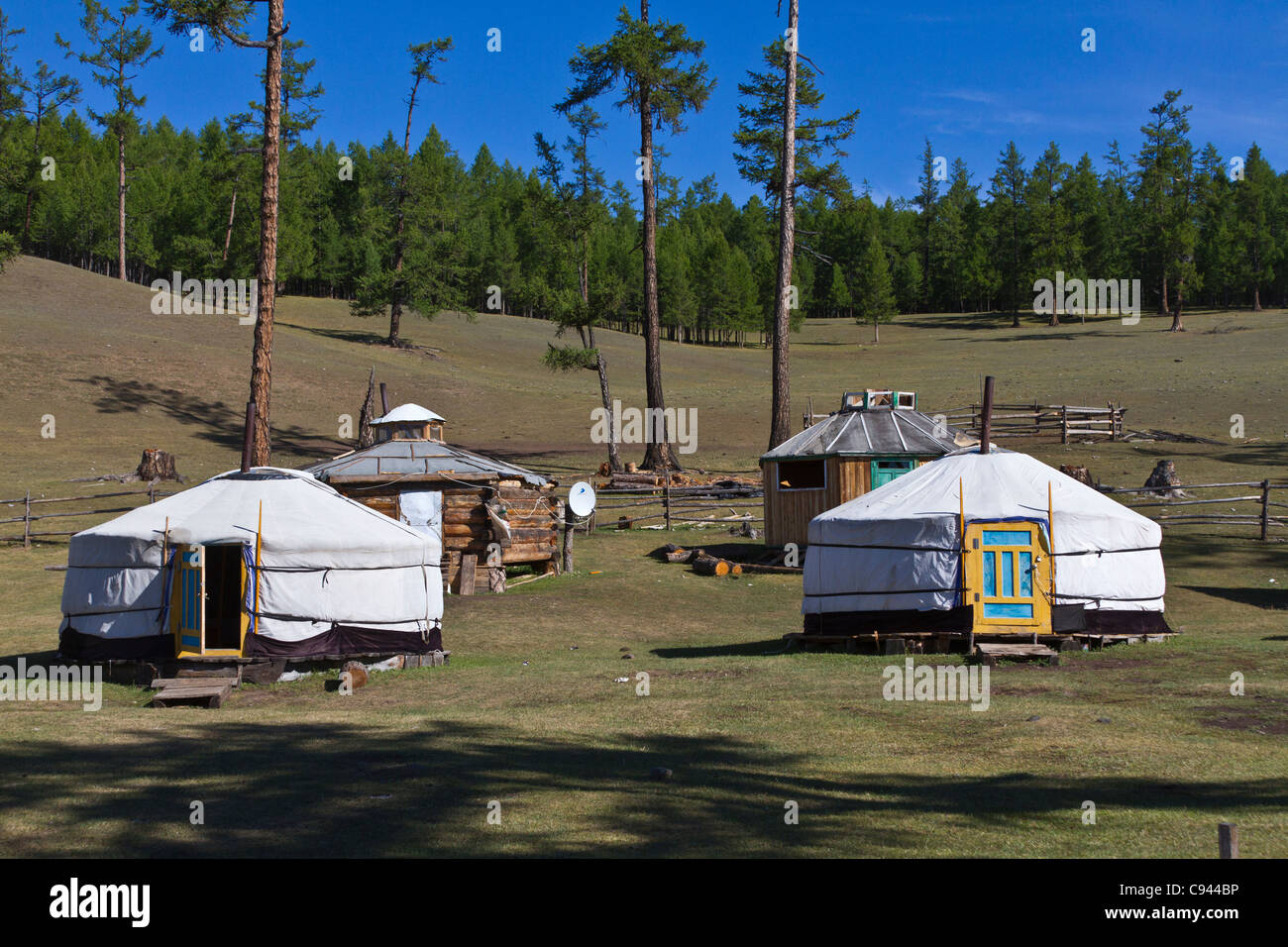 Gers or yurts in the forest of northern Mongolia for the reindeer herders. - Stock Image