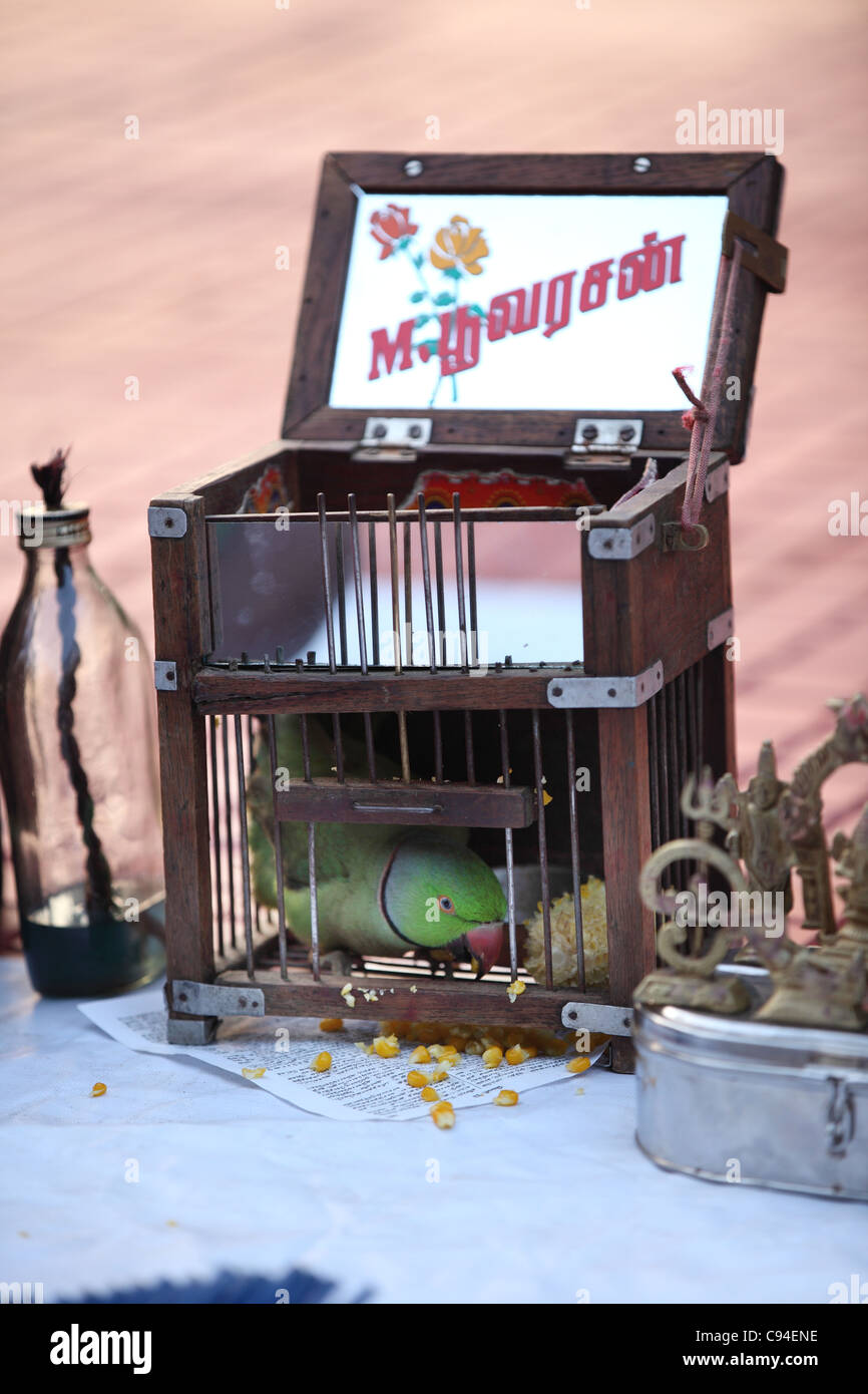 Fortune teller using a parrot Tamil Nadu India - Stock Image