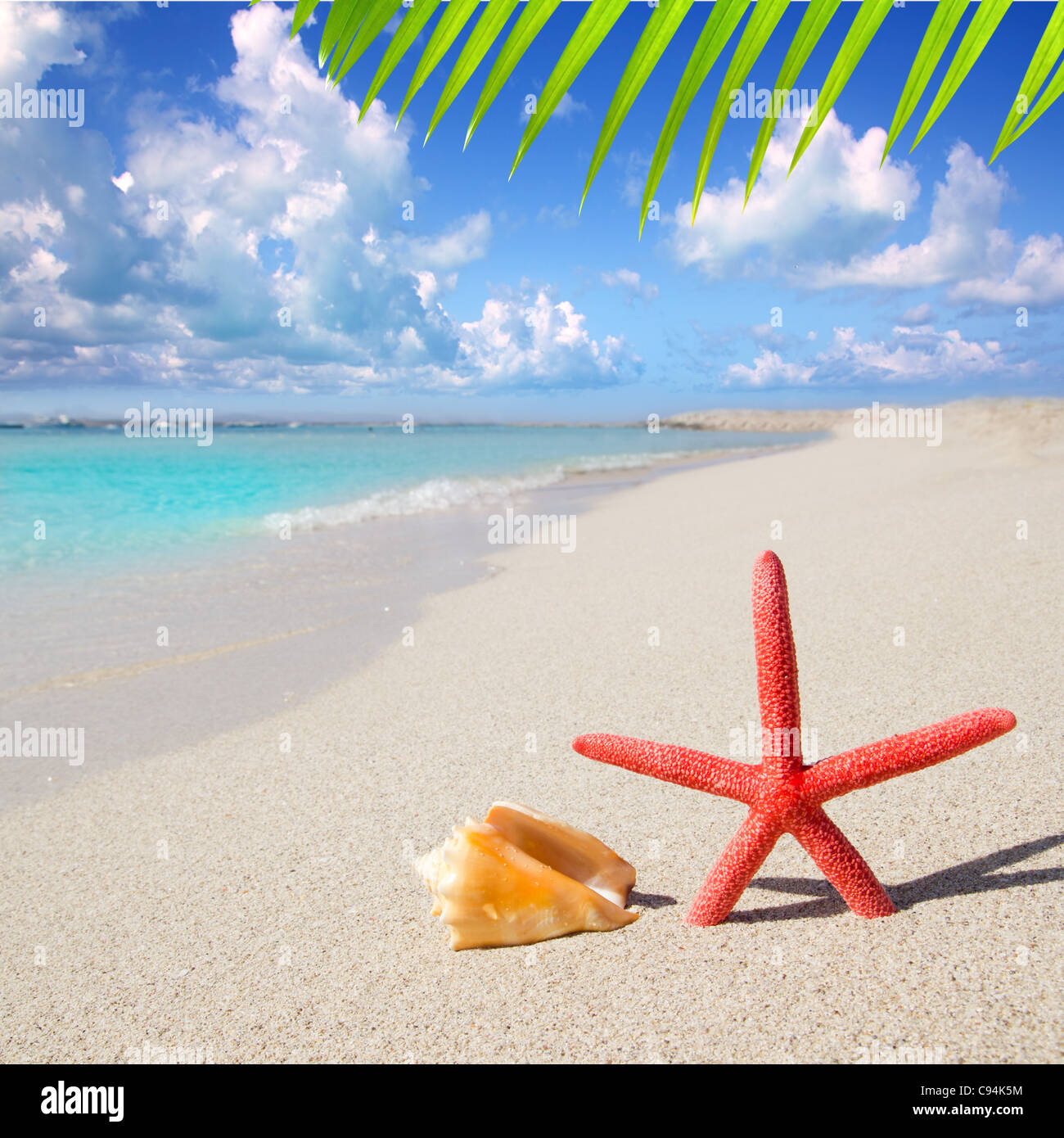 beach starfish and seashell on white sand of Formentera Illetes - Stock Image