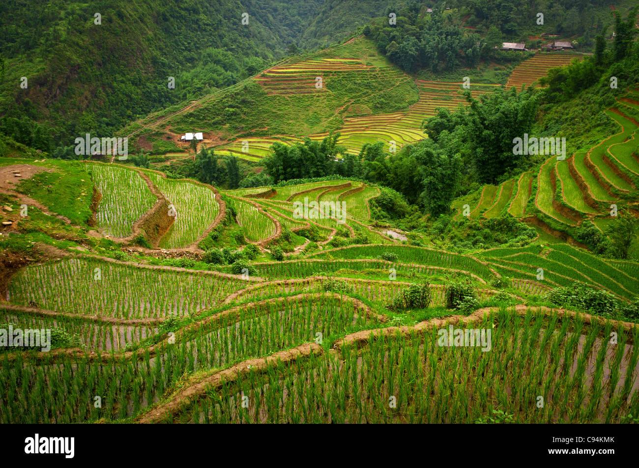 Sapa valley, Vietnam - Stock Image