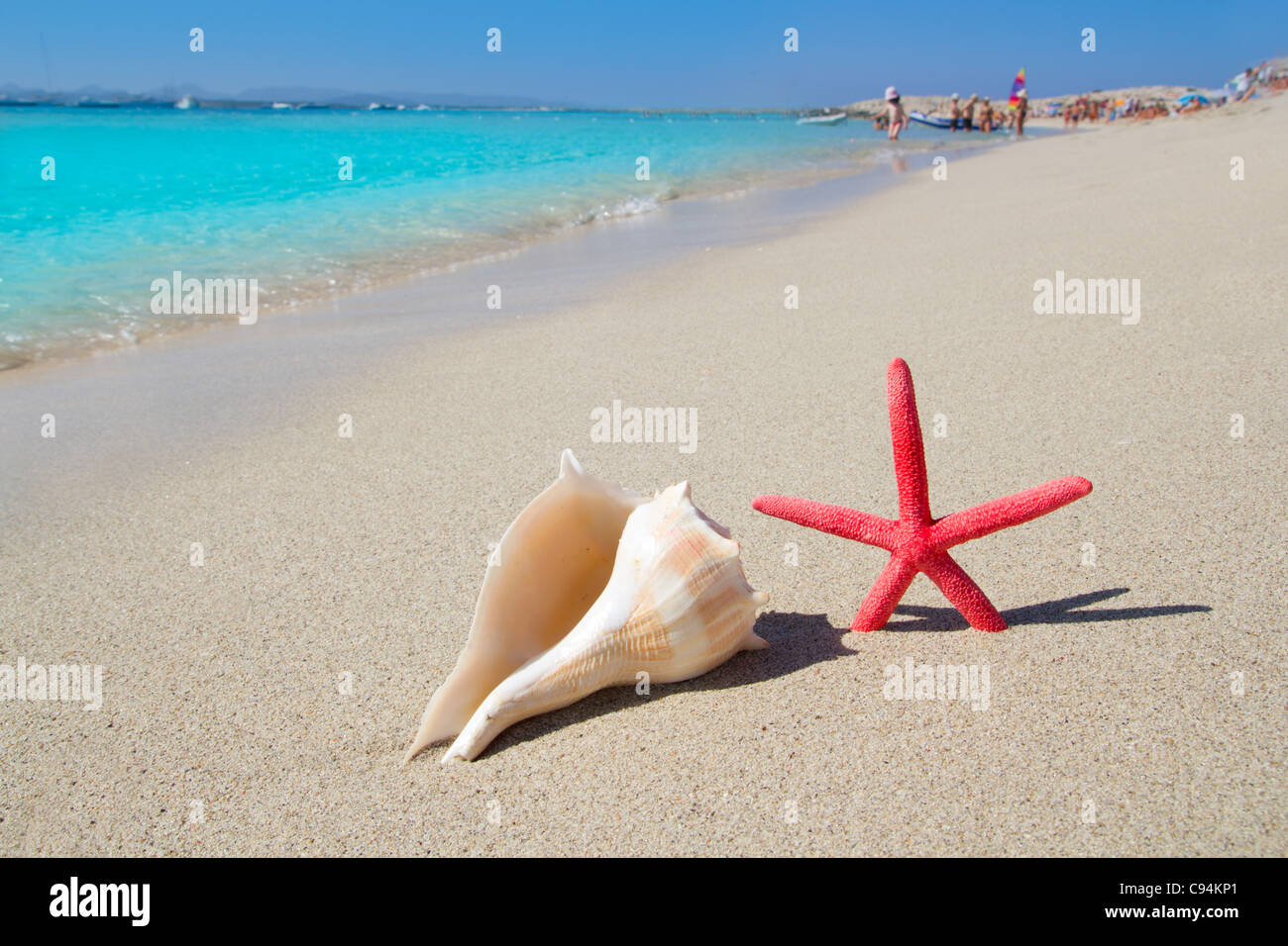 beach starfish and seashell in Formentera Illetes white sand - Stock Image