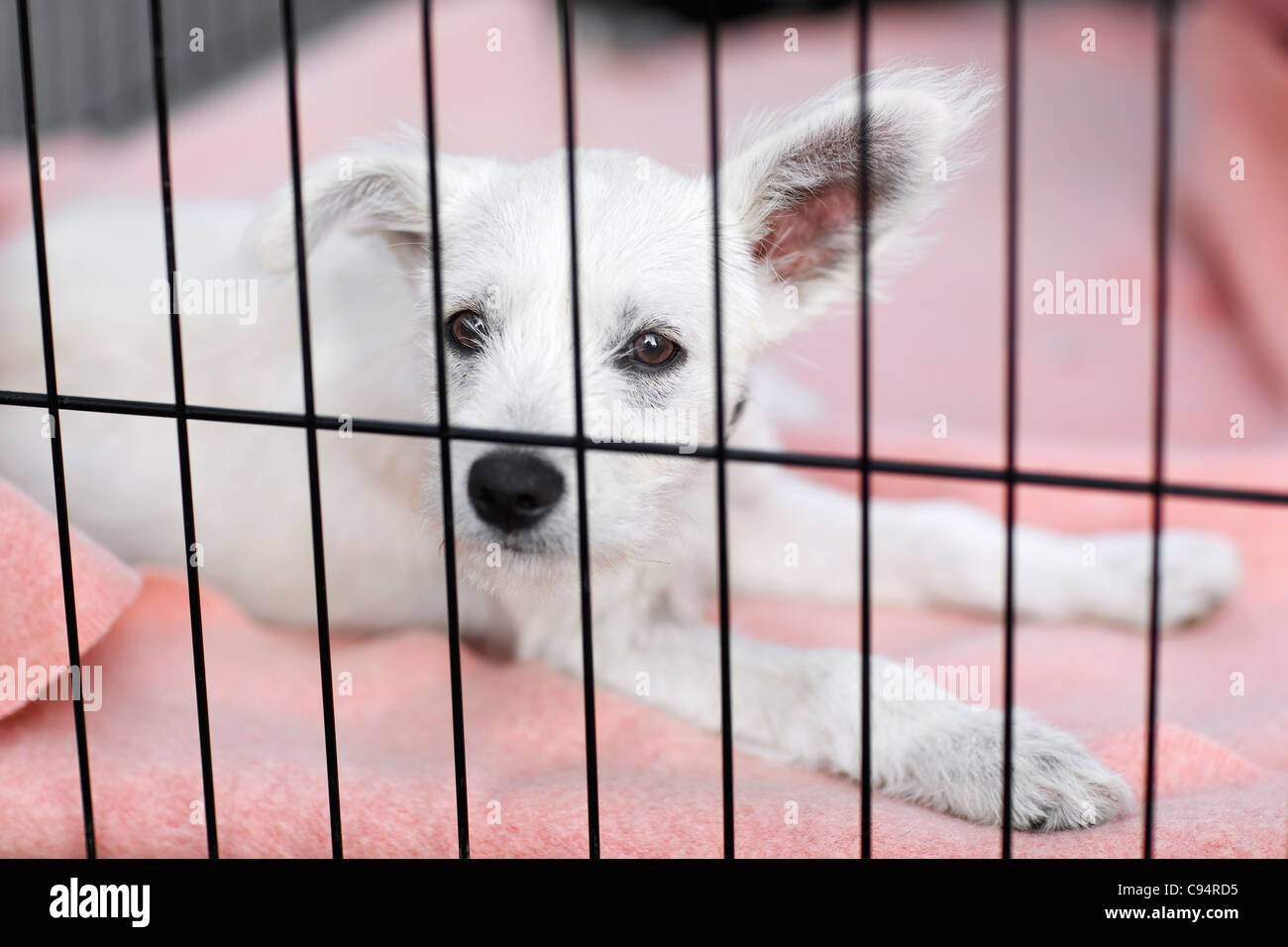 Puppy in cage, waiting for adoption at an animal shelter. - Stock Image