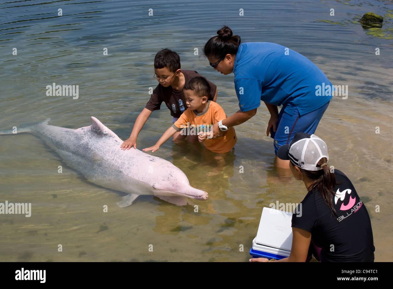 Sentosa Island - Dolphin Lagoon / pink dolphin encounters - Stock Image