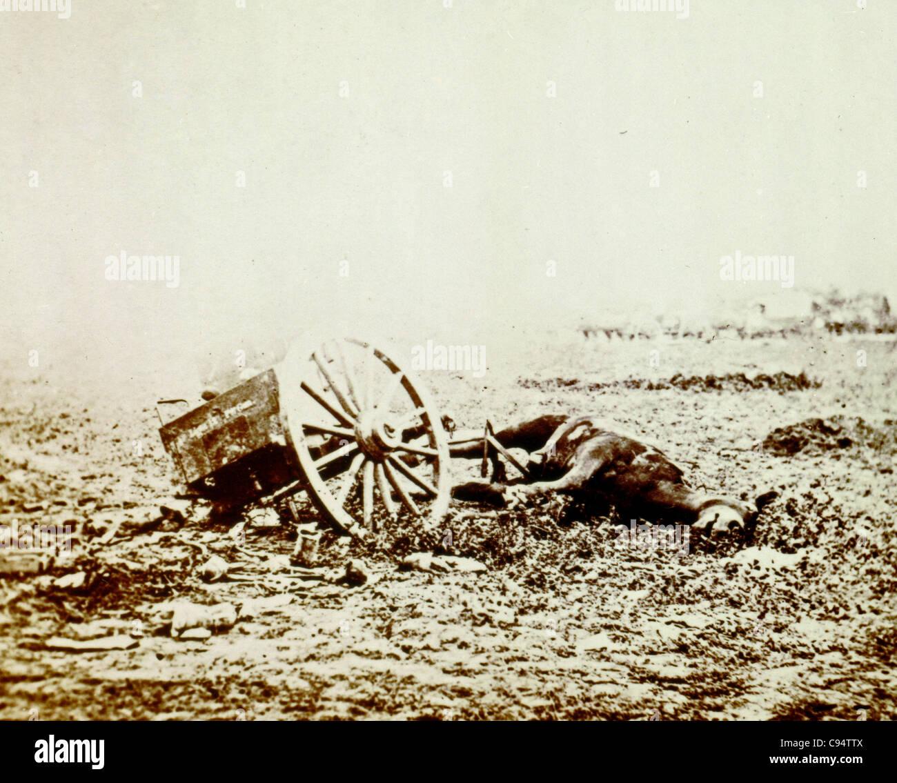 Dead horse on battlefield, Gettysburg, Pennsylvania - Stock Image