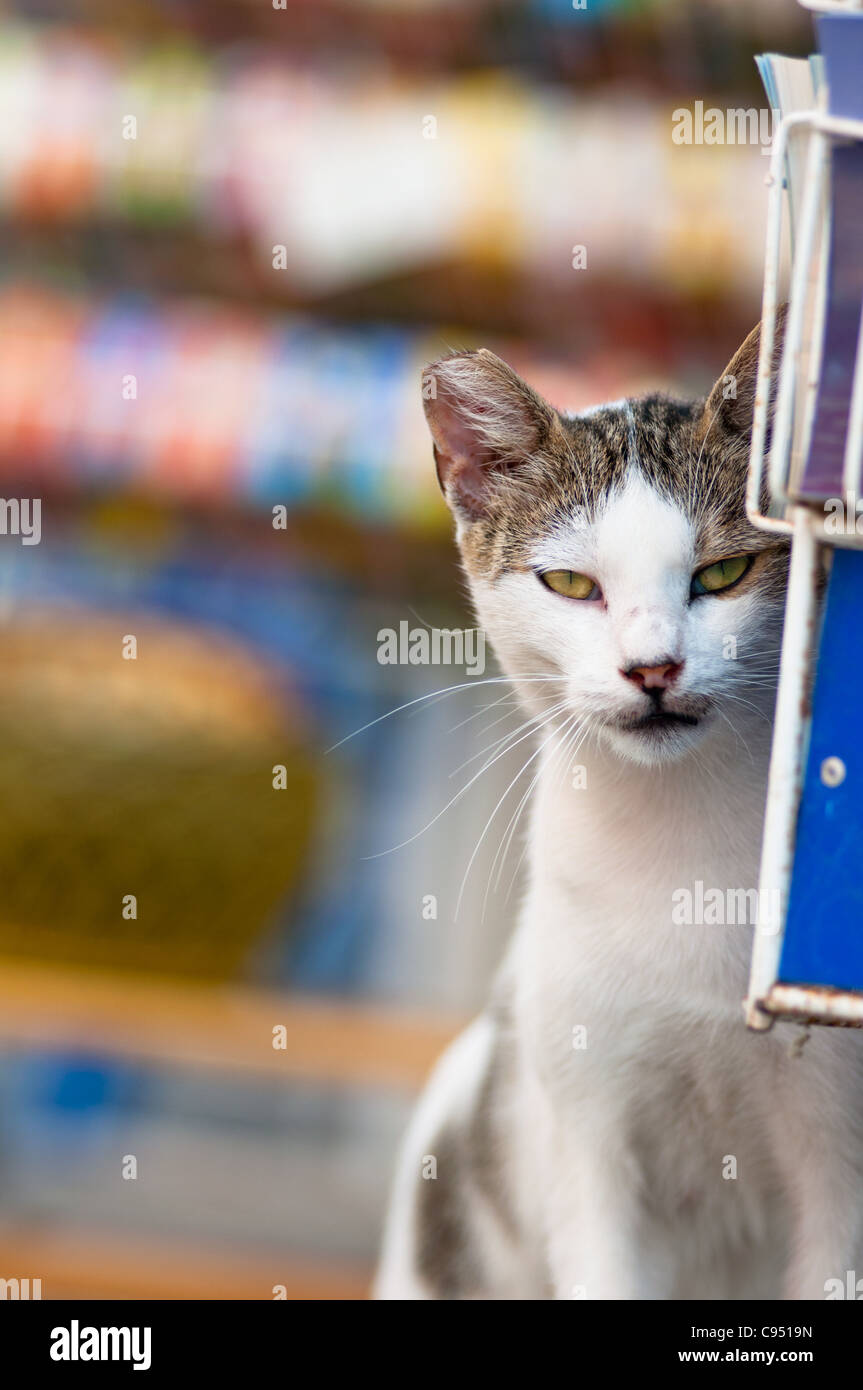 A local cat peeps past the tourist postcards in the village of Katakolon in Greece. - Stock Image