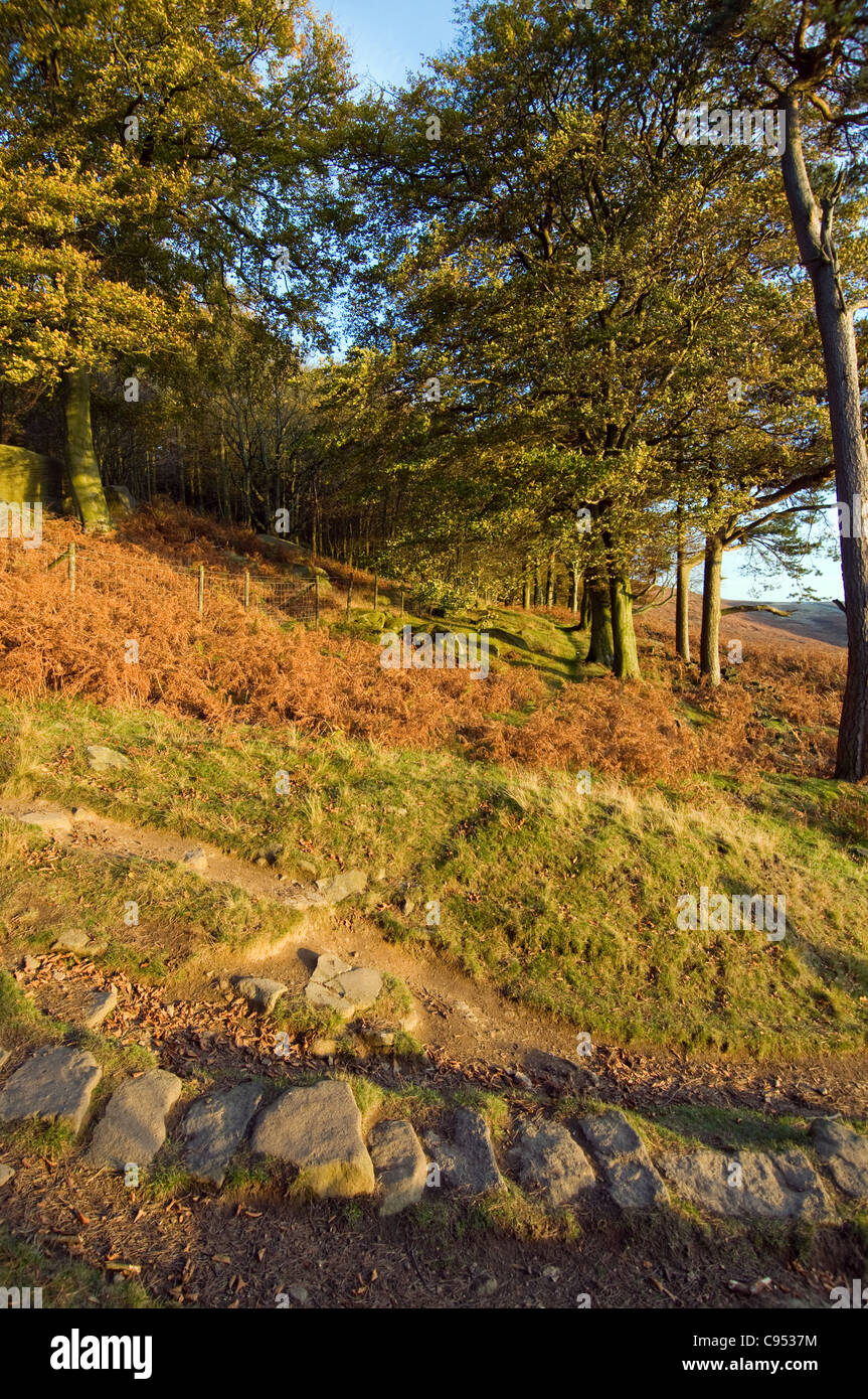 Trees at Stanage Edge in the Peak District National Park Derbyshire Shot in Autumn - Stock Image