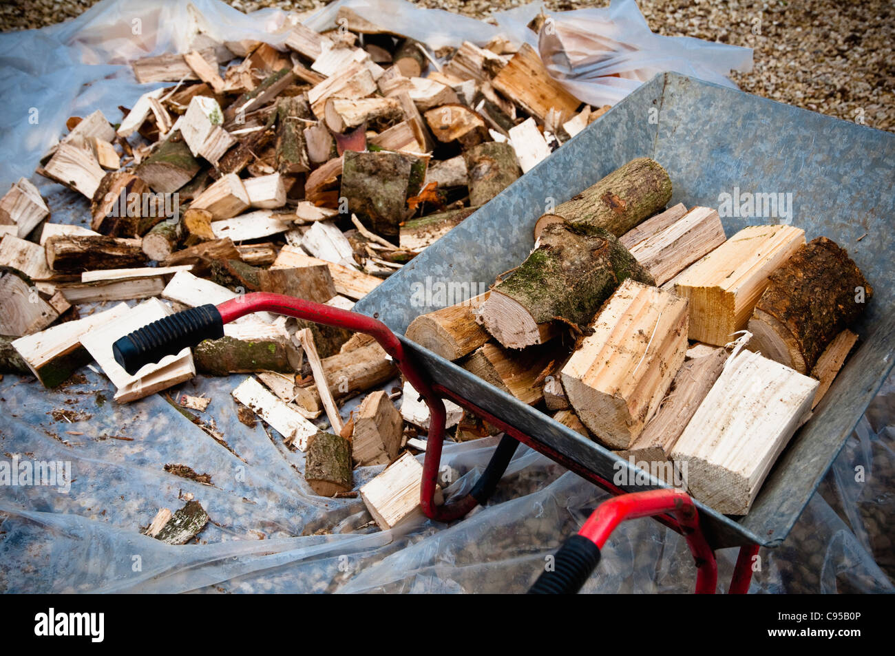 Winter firewood - loading a delivery of logs into a wheelbarrow. UK - Stock Image