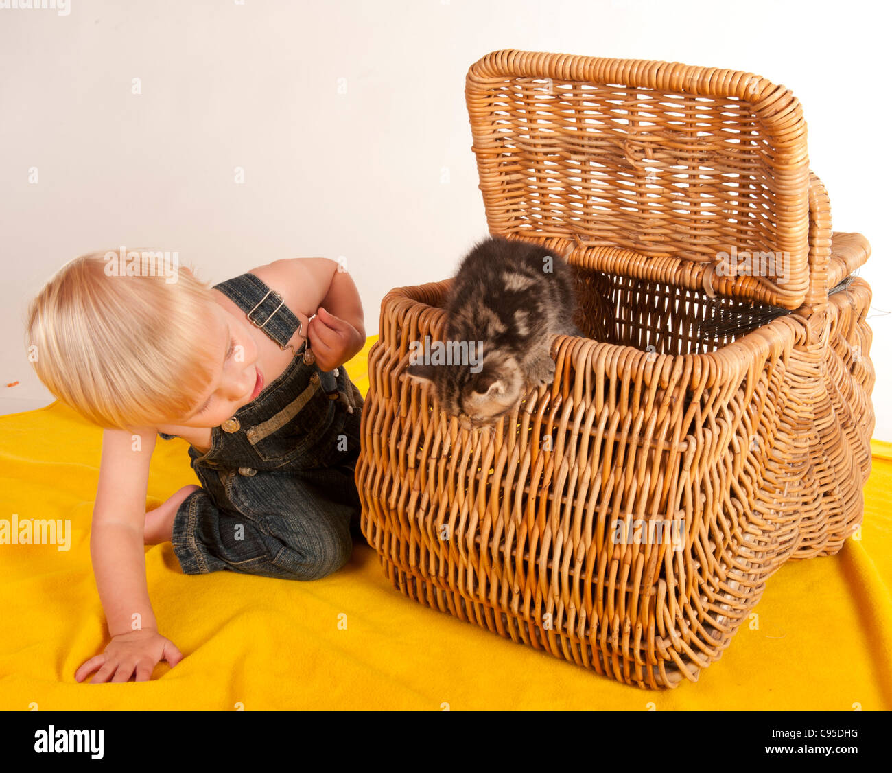 little boy curiously playing with kittens in picnic basket - Stock Image