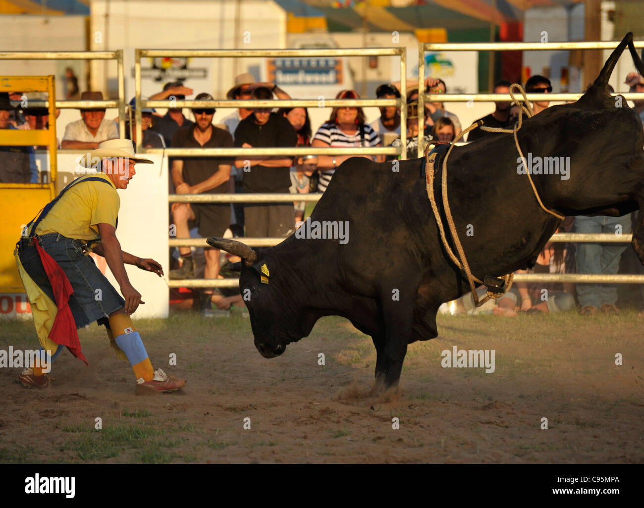 A rodeo clown taunts a rodeo bull that has thrown it's rider. - Stock Image