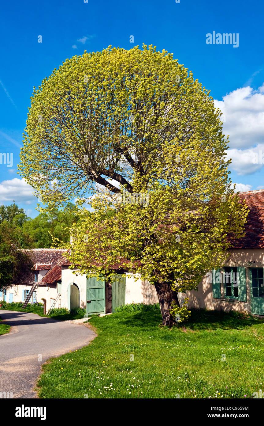 Linden Tree House Stock Photos & Linden Tree House Stock Images - Alamy