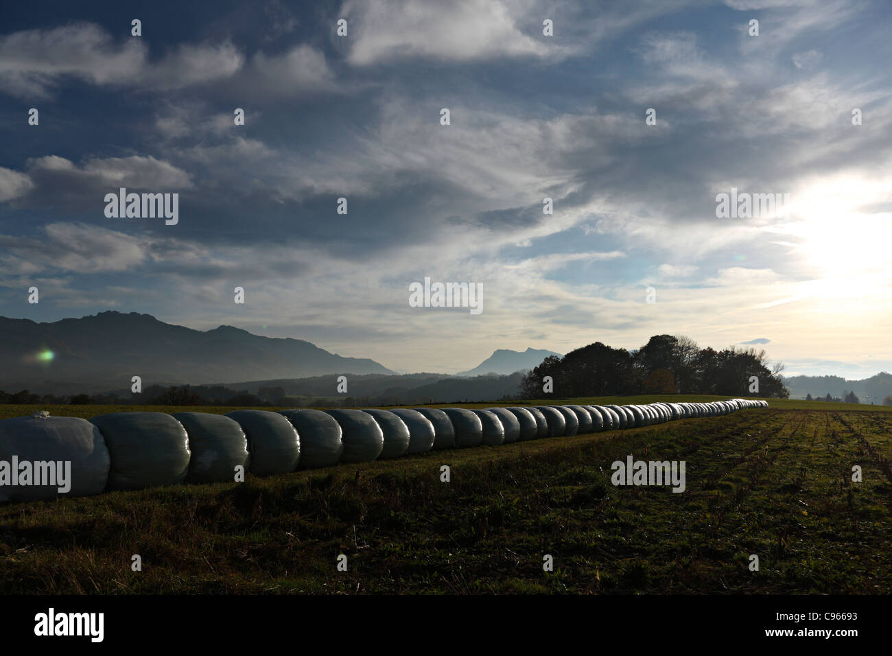 Plastic wrapped bails of hay in Bavarian farm landscape, Chiemgau Upper Bavaria Germany - Stock Image