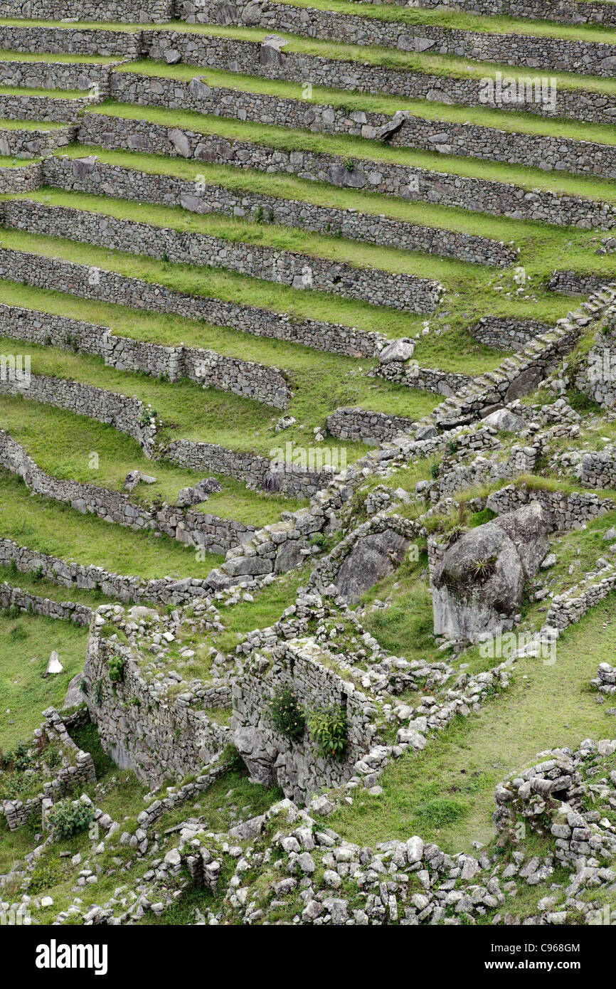 Cultivation Terraces At Ancient Inca Ruins Of Machu Picchu