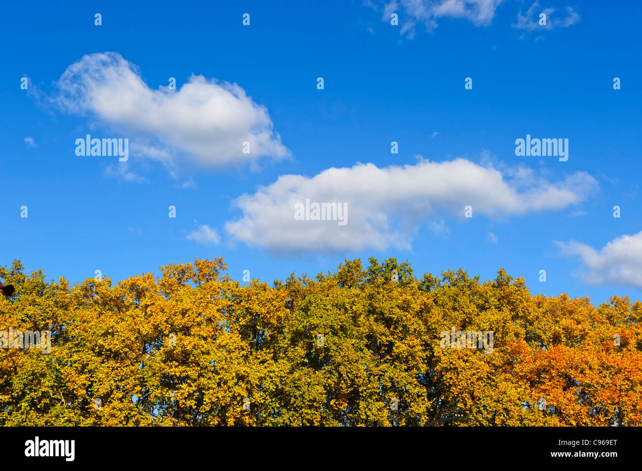 Autumn trees and blue sky with clouds - Stock Image