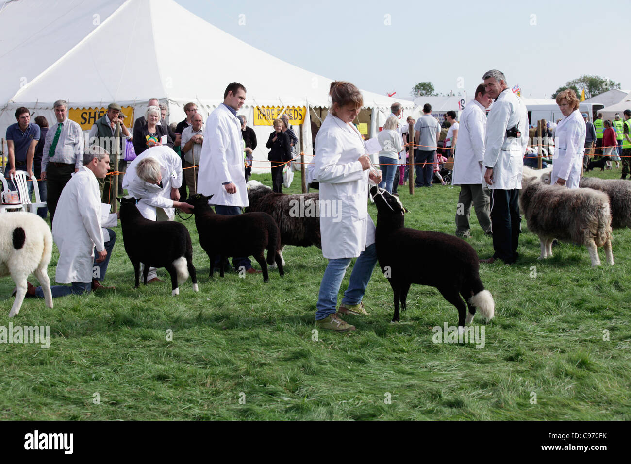 Rare breeds competition at Gransden and District Agricultural Show 2011 - Stock Image