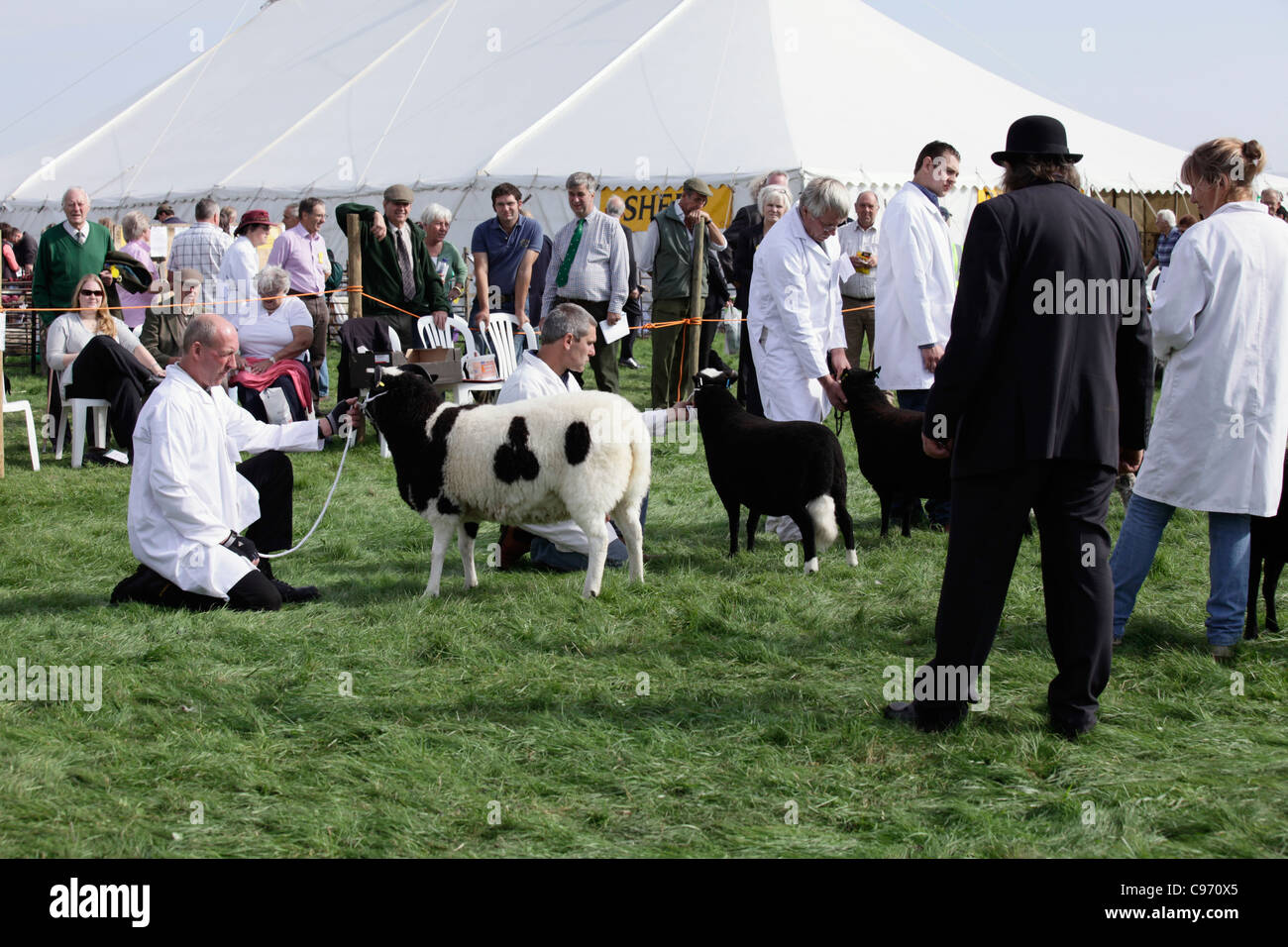 Rare breeds judging at Gransden and District Agricultural Show 2011 - Stock Image