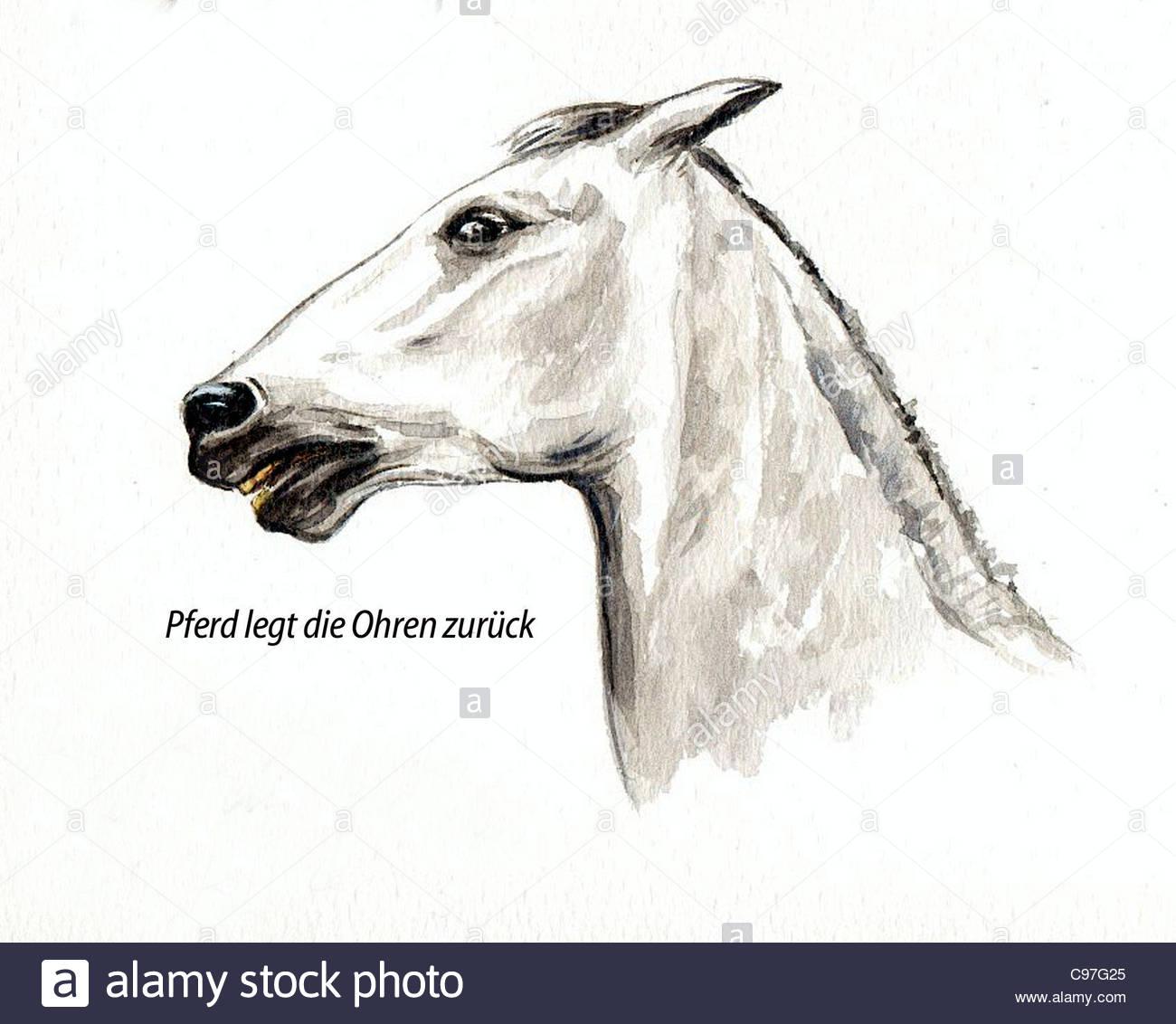 Anatomy Horse Animal Illustration Stock Photos & Anatomy Horse ...
