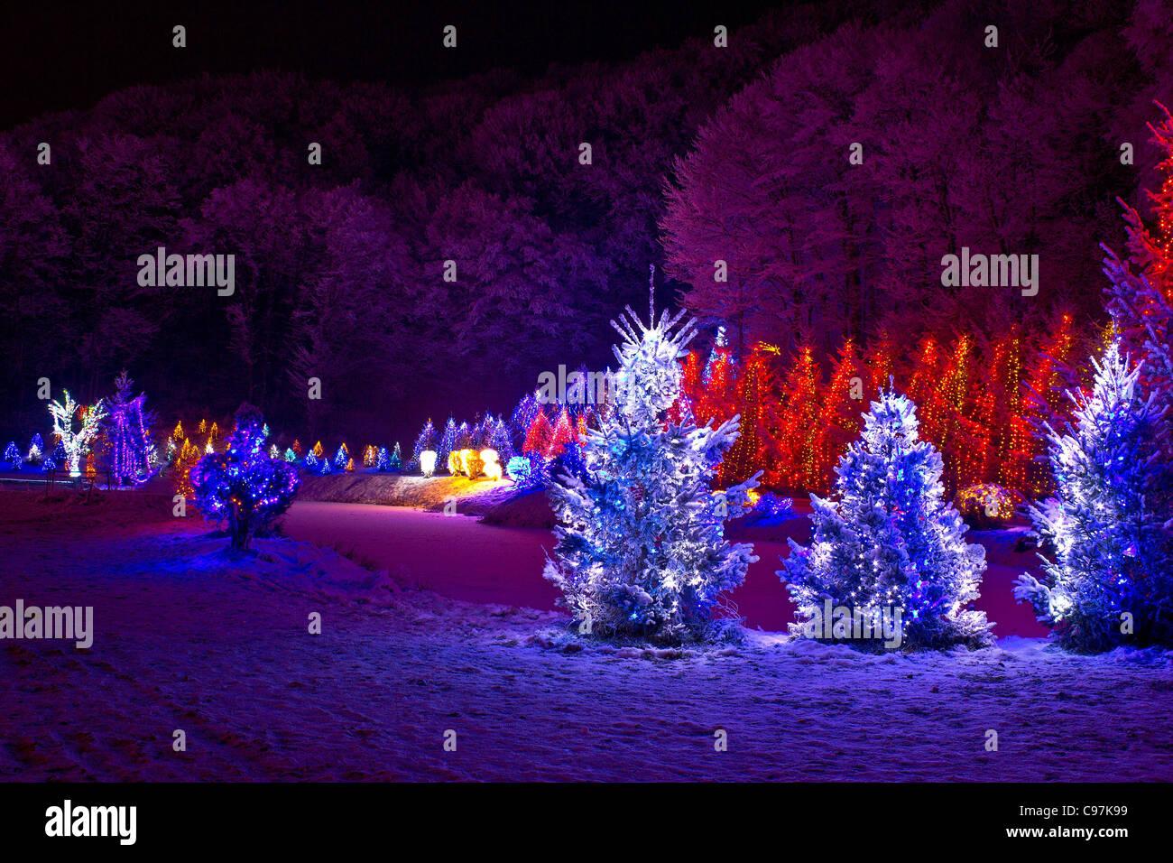christmas fantasy - pine trees in x-mas lights, Cazma, Croatia - Stock Image