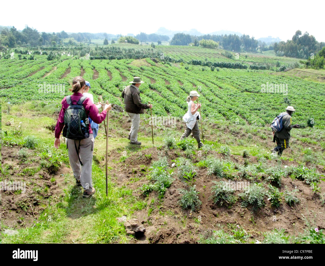 Virunga Mountains, Rwnada, Africa.  Tourists tekking to view the mountain gorillas in Volcanoes National Park. - Stock Image