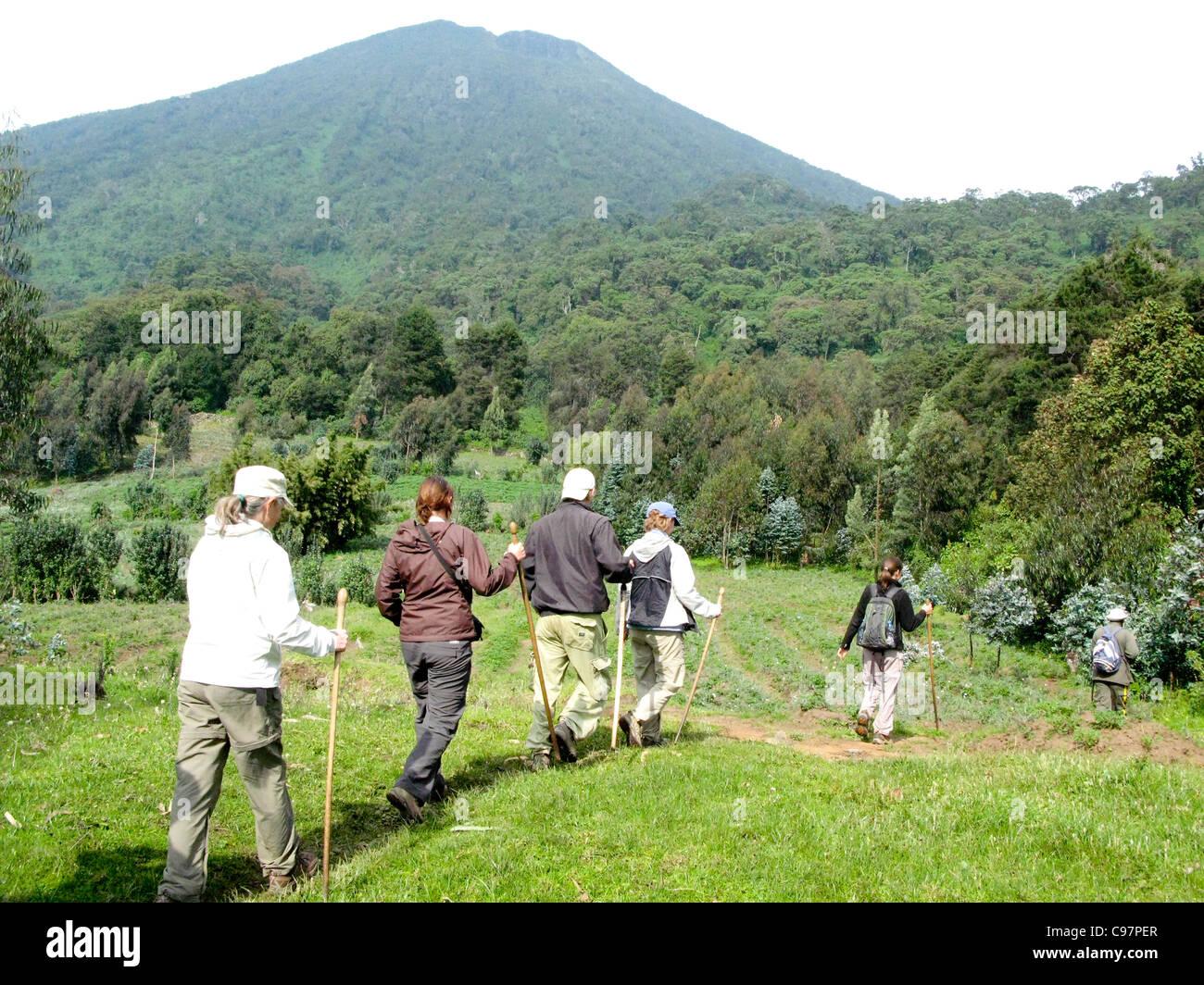 Virunga Mountains, Rwanda.  Tourists trekking into Volcanoes National Park to view the mountain gorillas. - Stock Image