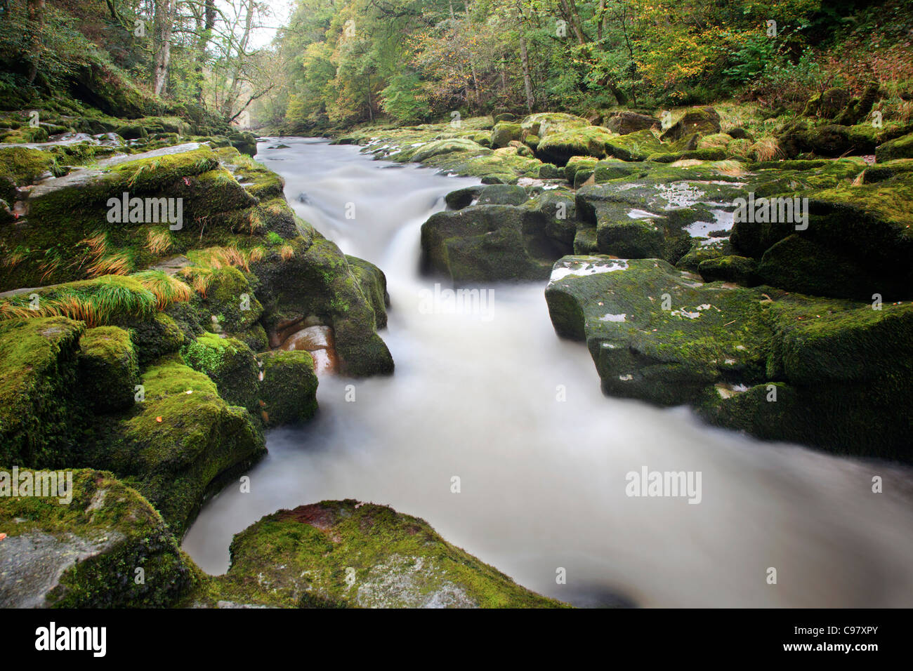 Strid Wood; River Wharfe; Bolton Abbey; Yorkshire; UK - Stock Image