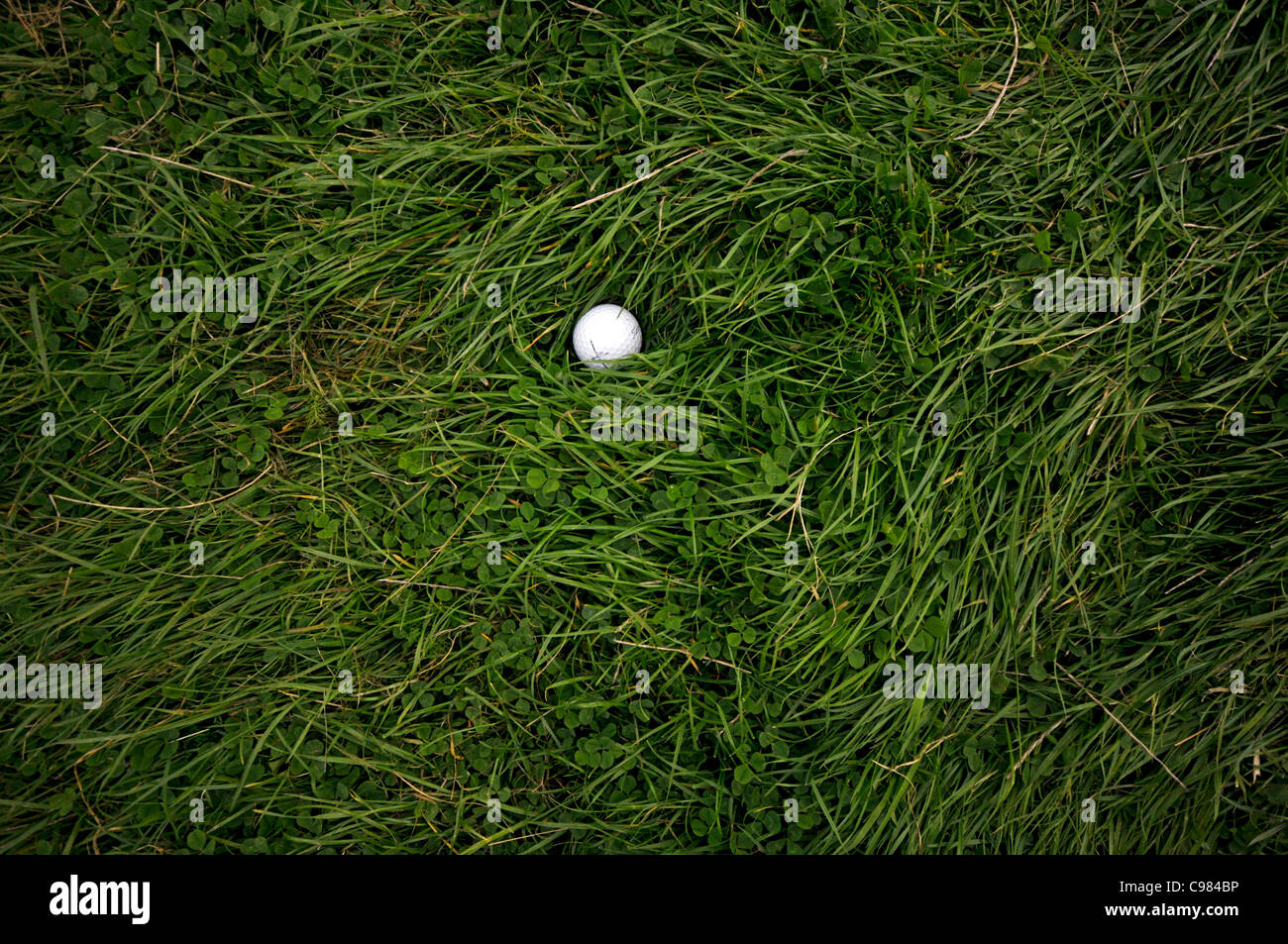 Golf ball on the rough, long grass, golf course - Stock Image