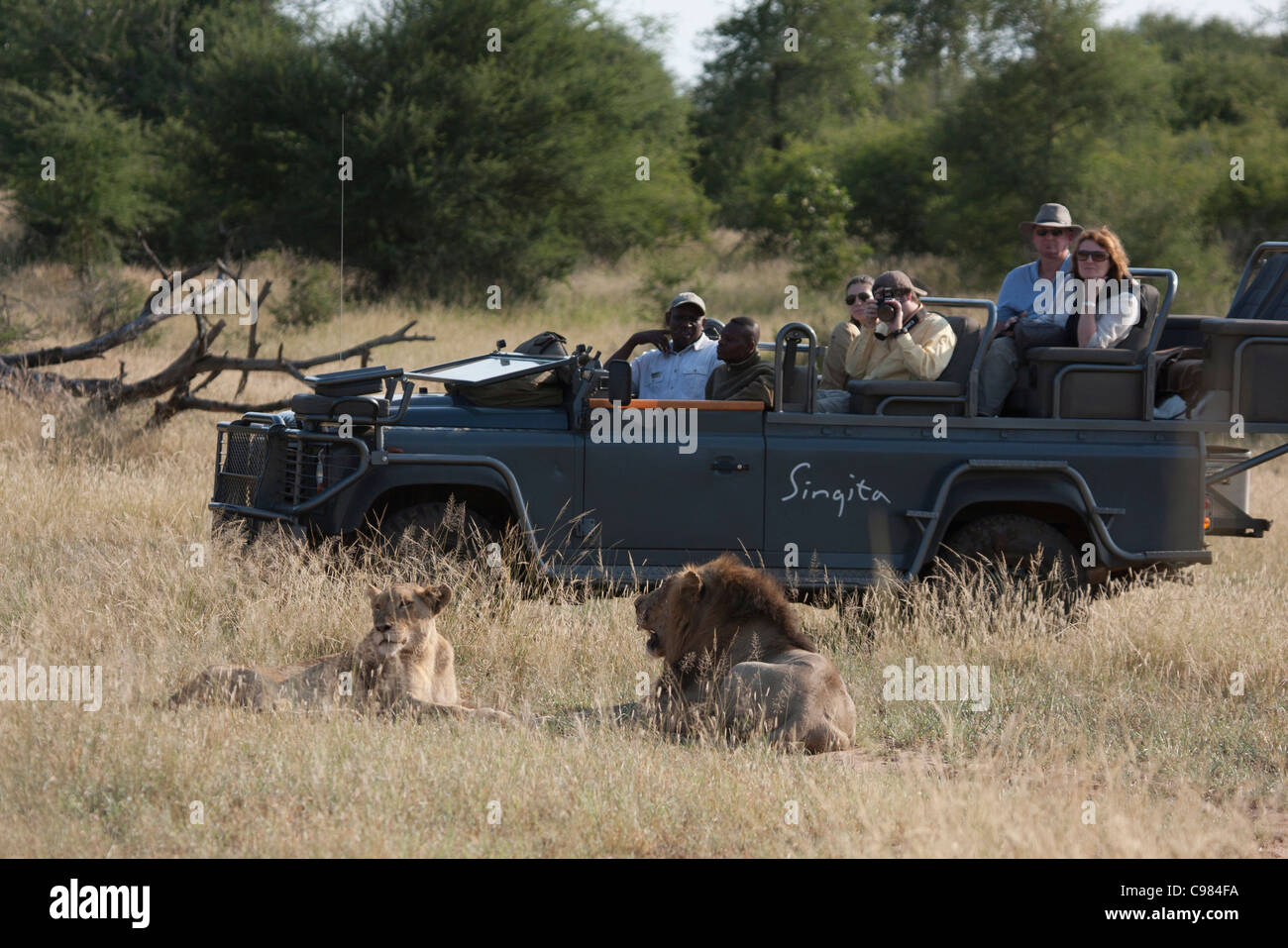 Tourists on a game-drive watching a lions - Stock Image