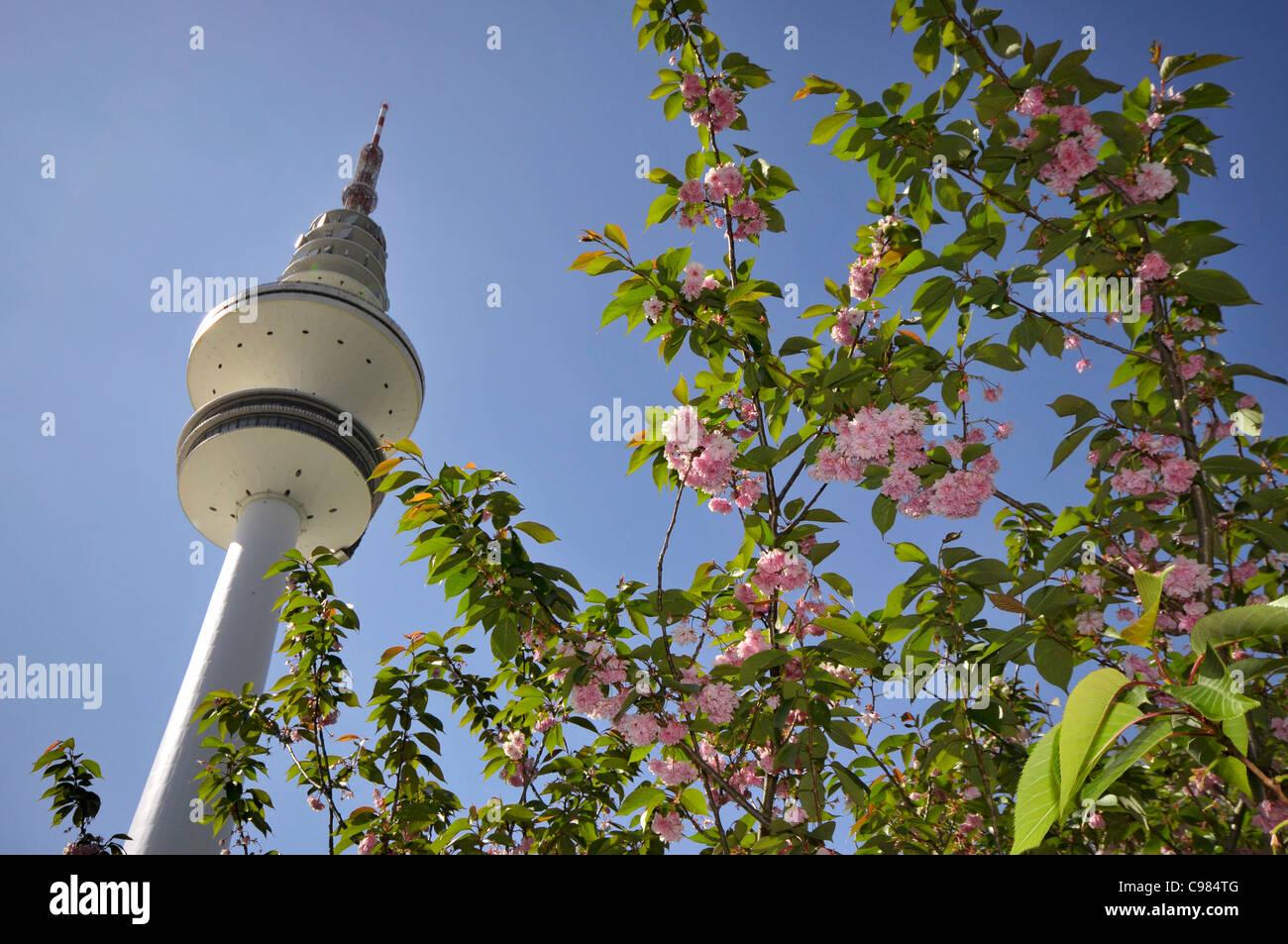 Spring meadow, Planten un Blomen Park, Communications Tower, Hamburg, Germany, Europe - Stock Image