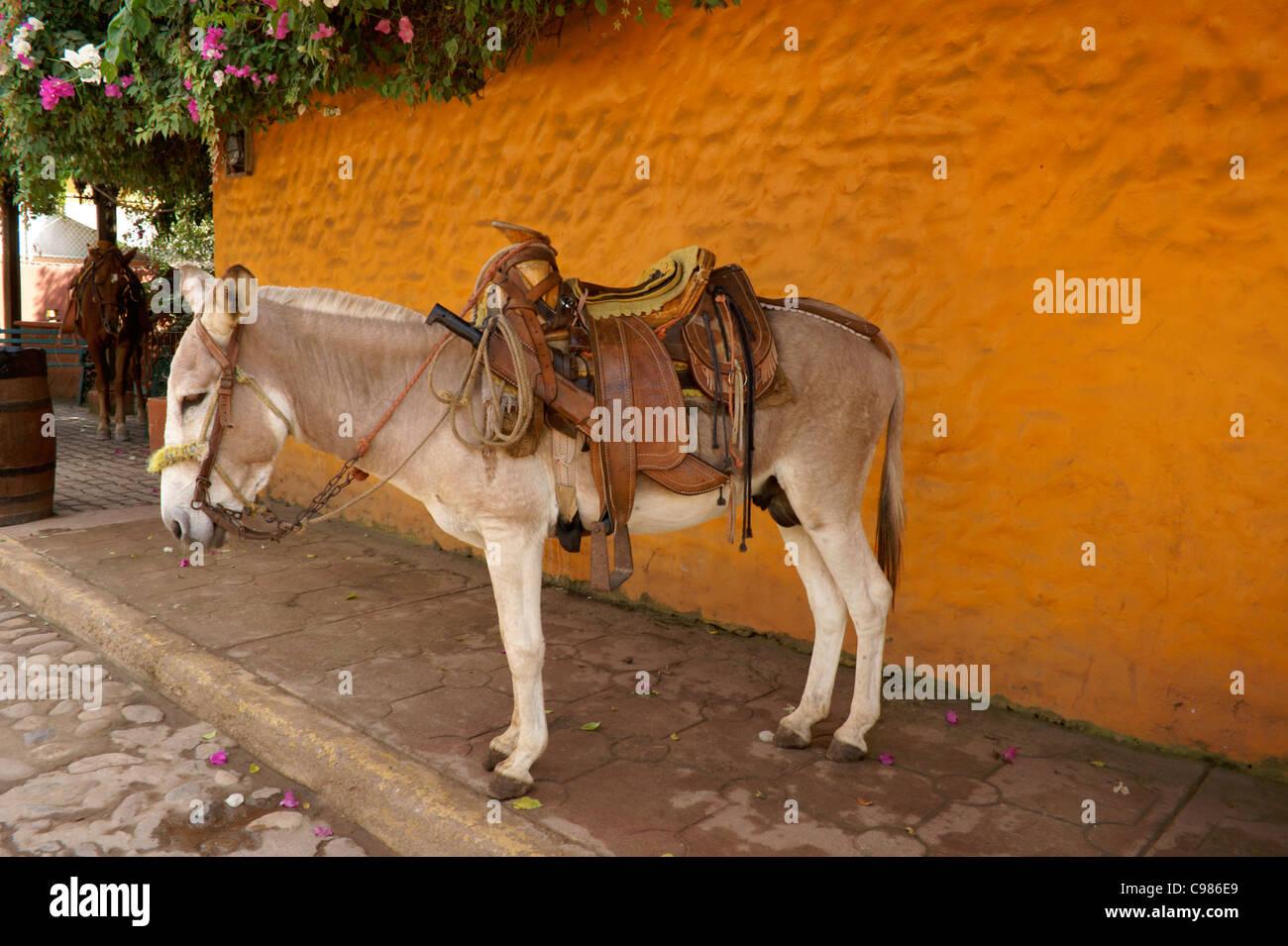 Quelite Stock Photos & Quelite Stock Images - Alamy