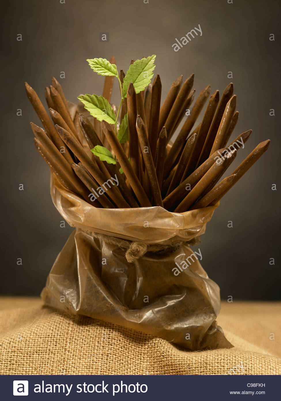 Rusty iron nails and plant - Stock Image