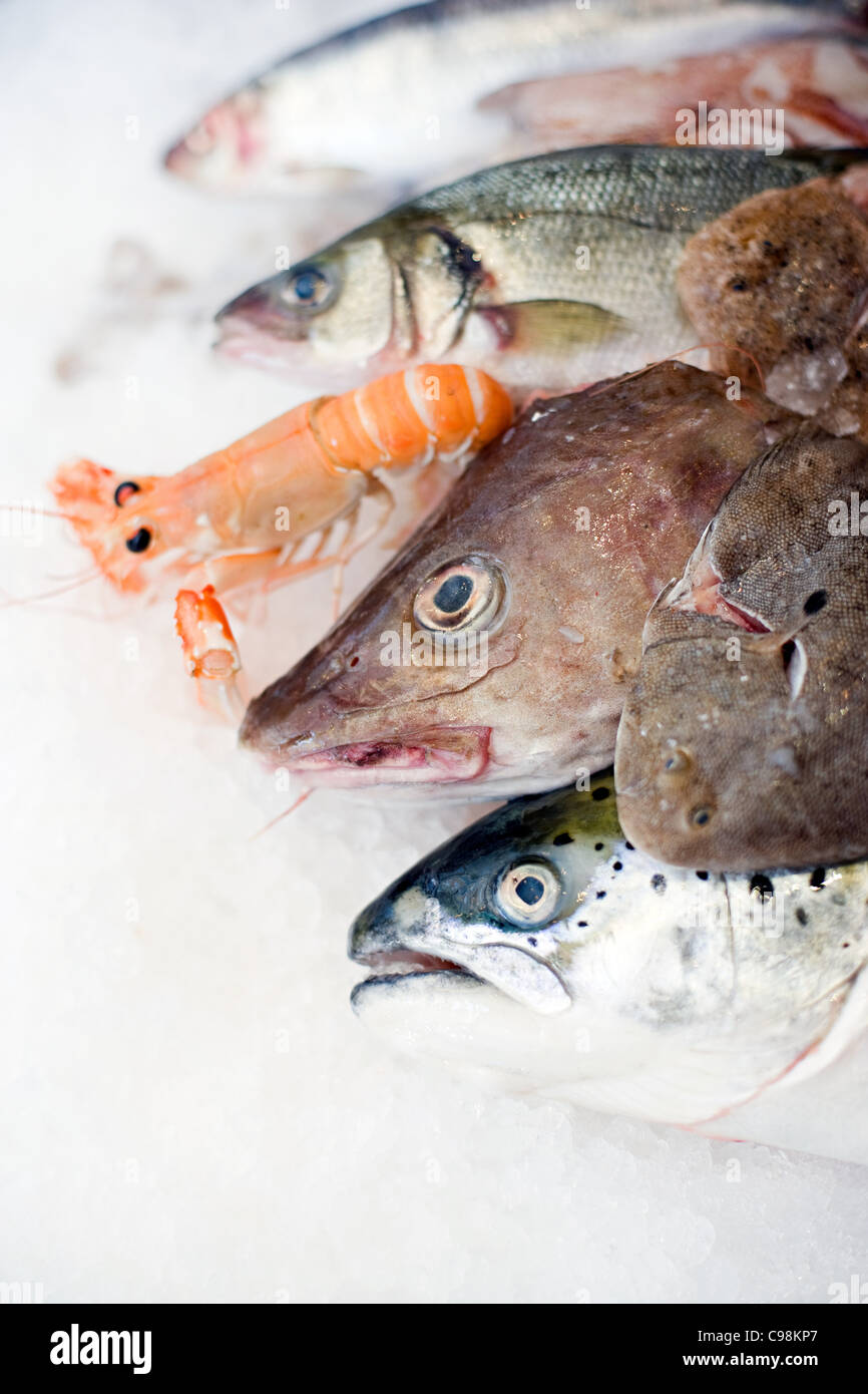 A selection fish on ice - Stock Image