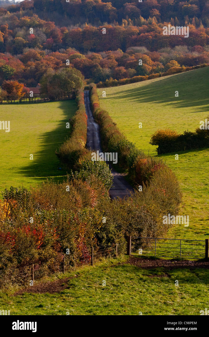 Country lane and hedgerow,Turville,Chiltern Hills, Buckinghamshire - Stock Image