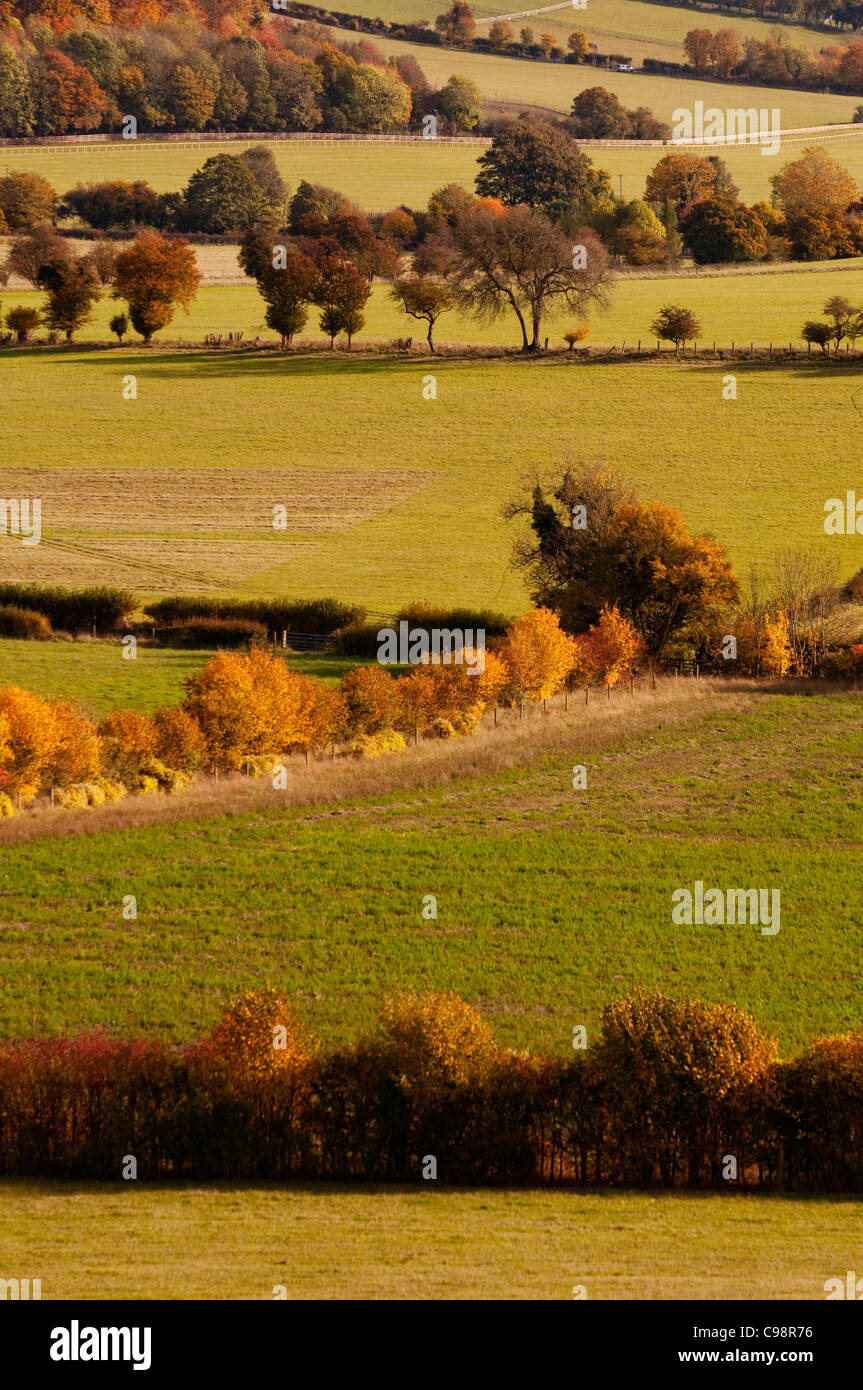 Fields and hedgerow, Chiltern Hills, near Turville,Buckinghamshire - Stock Image