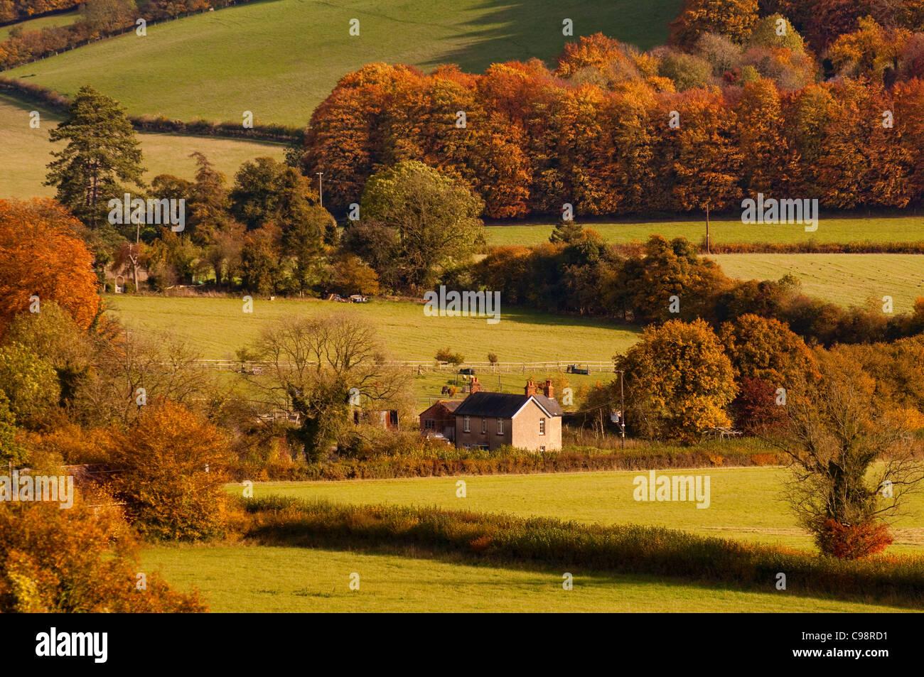 Chiltern Hills near Turville, Buckinghamshire - Stock Image