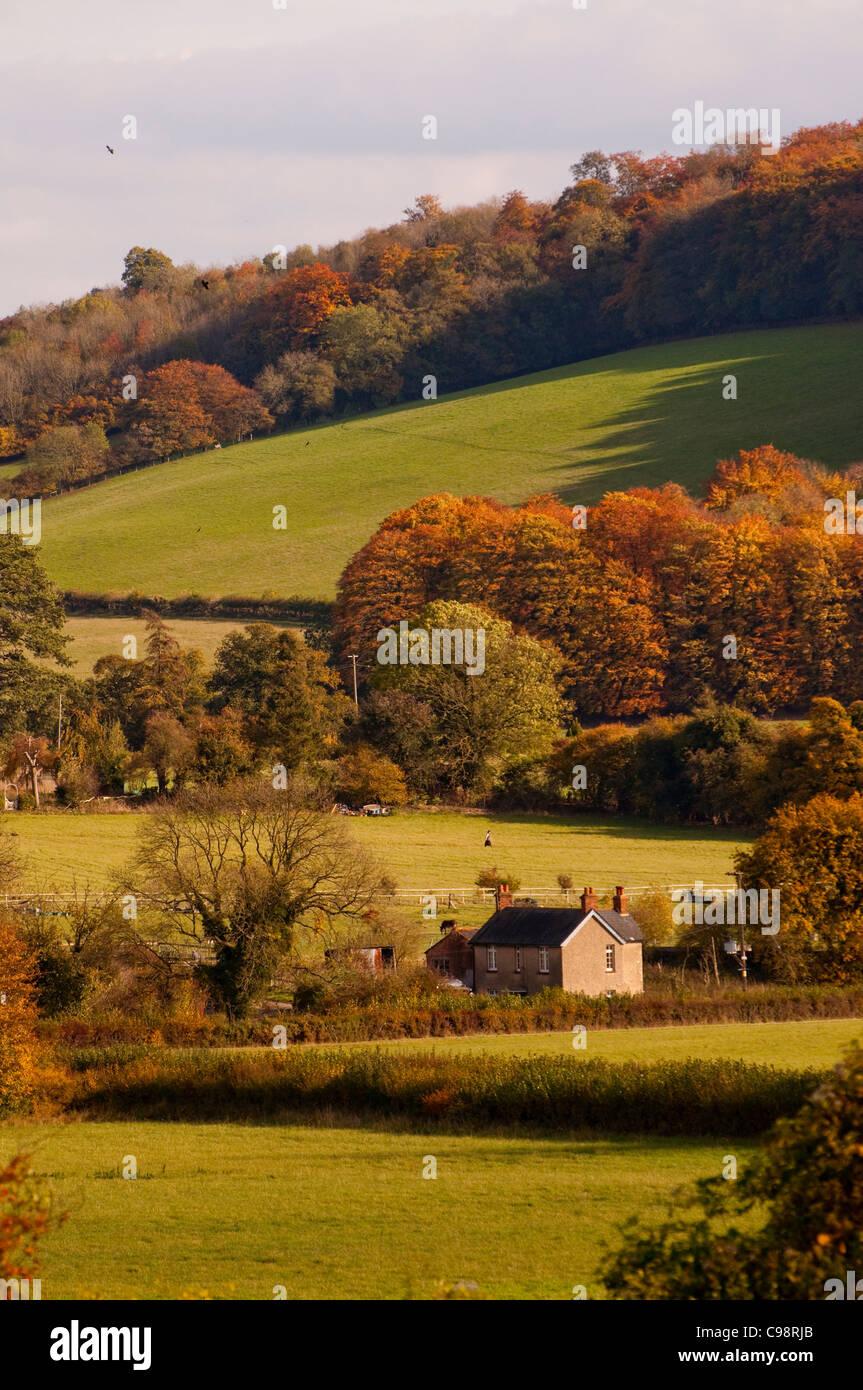 Chiltern Hills near Turville,Buckinghamshire - Stock Image