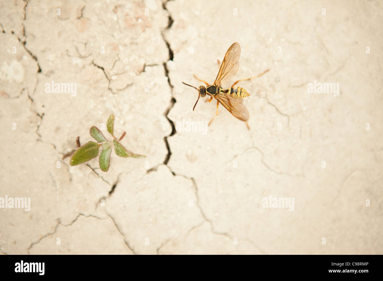 A wasp and weed on cracked wall - Stock Image