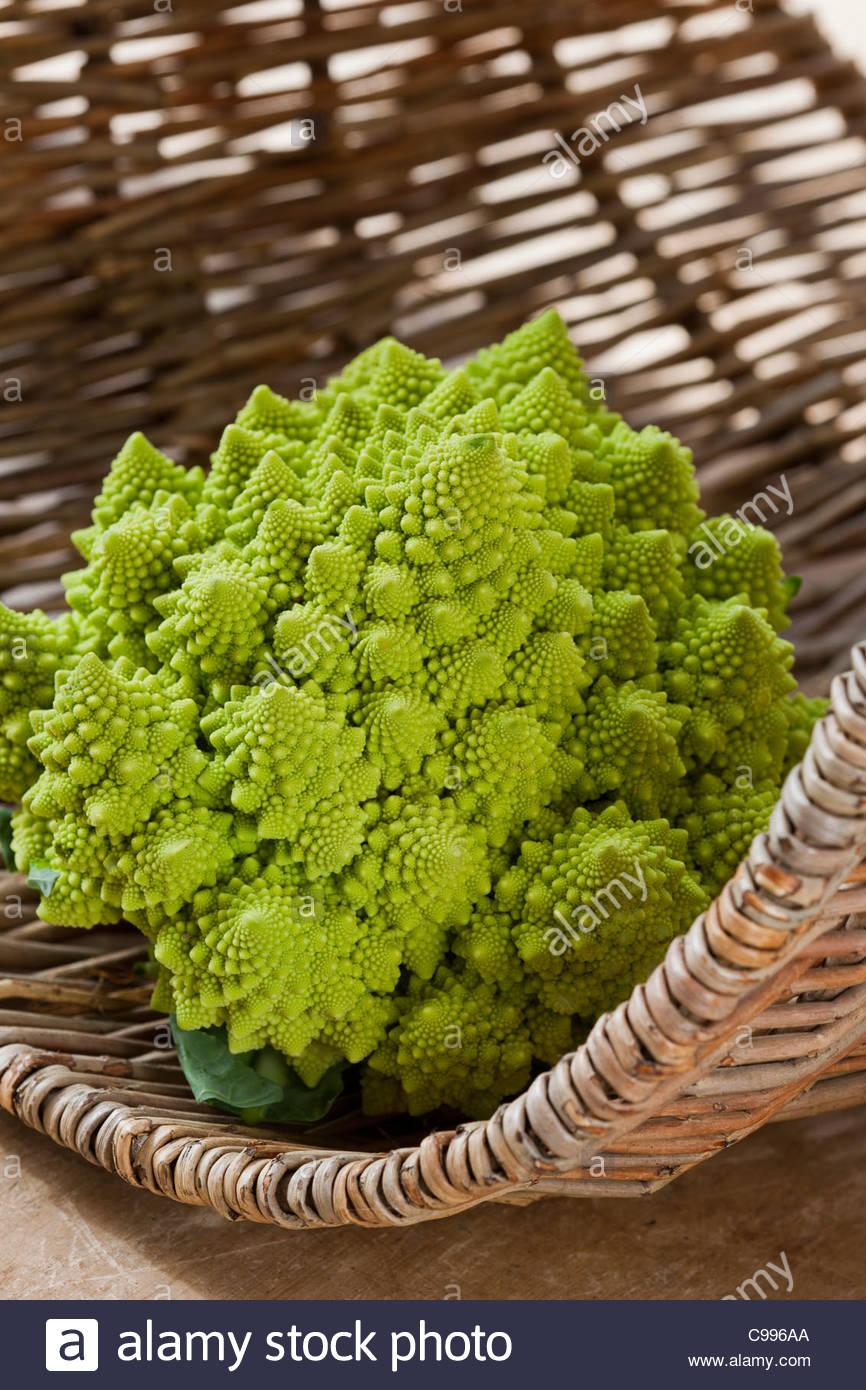 Cauliflower Romanesco unusual spiral fractal geometry autumn fall vegetable crop home grown organic lime green edible - Stock Image