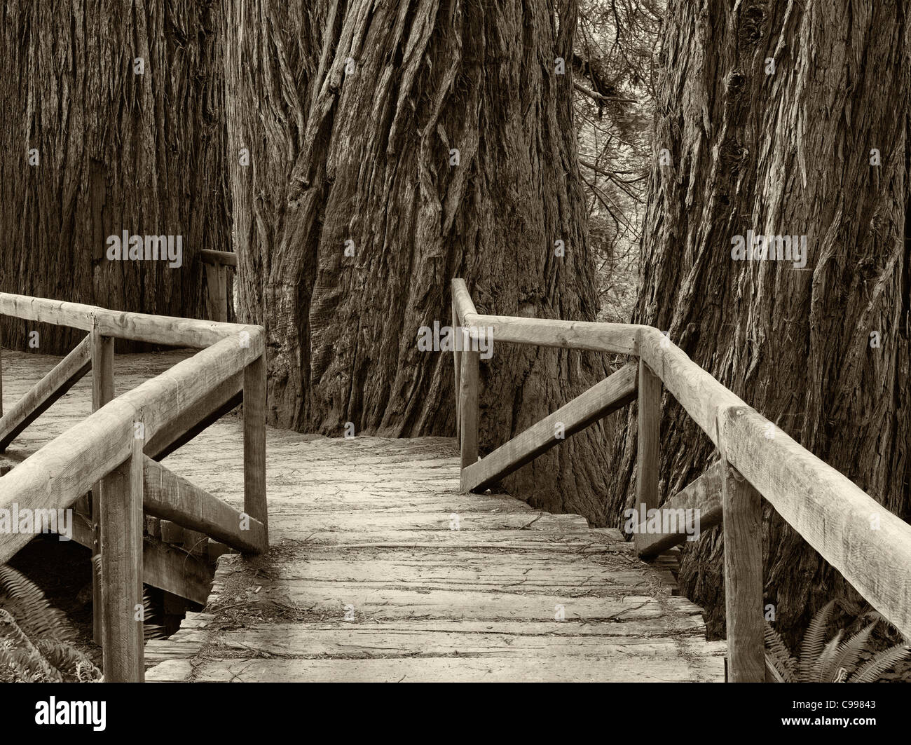 Bridge over creek in Redwood National and State Parks, California Stock Photo