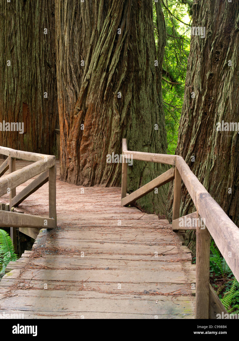 Bridge over creek in Redwood National and State Parks, California - Stock Image
