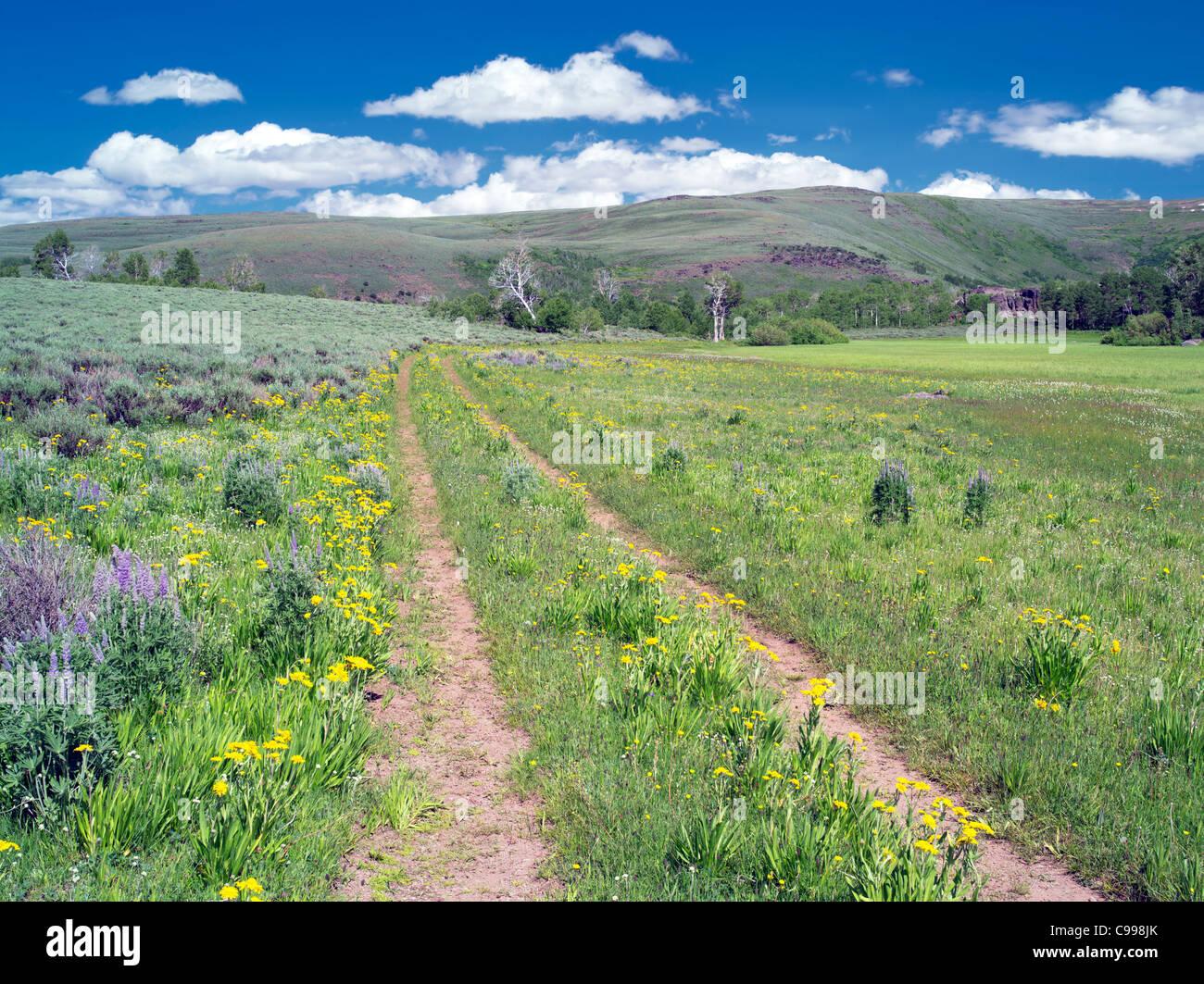Road through wildflowers. Steen Mountain, Oregon - Stock Image