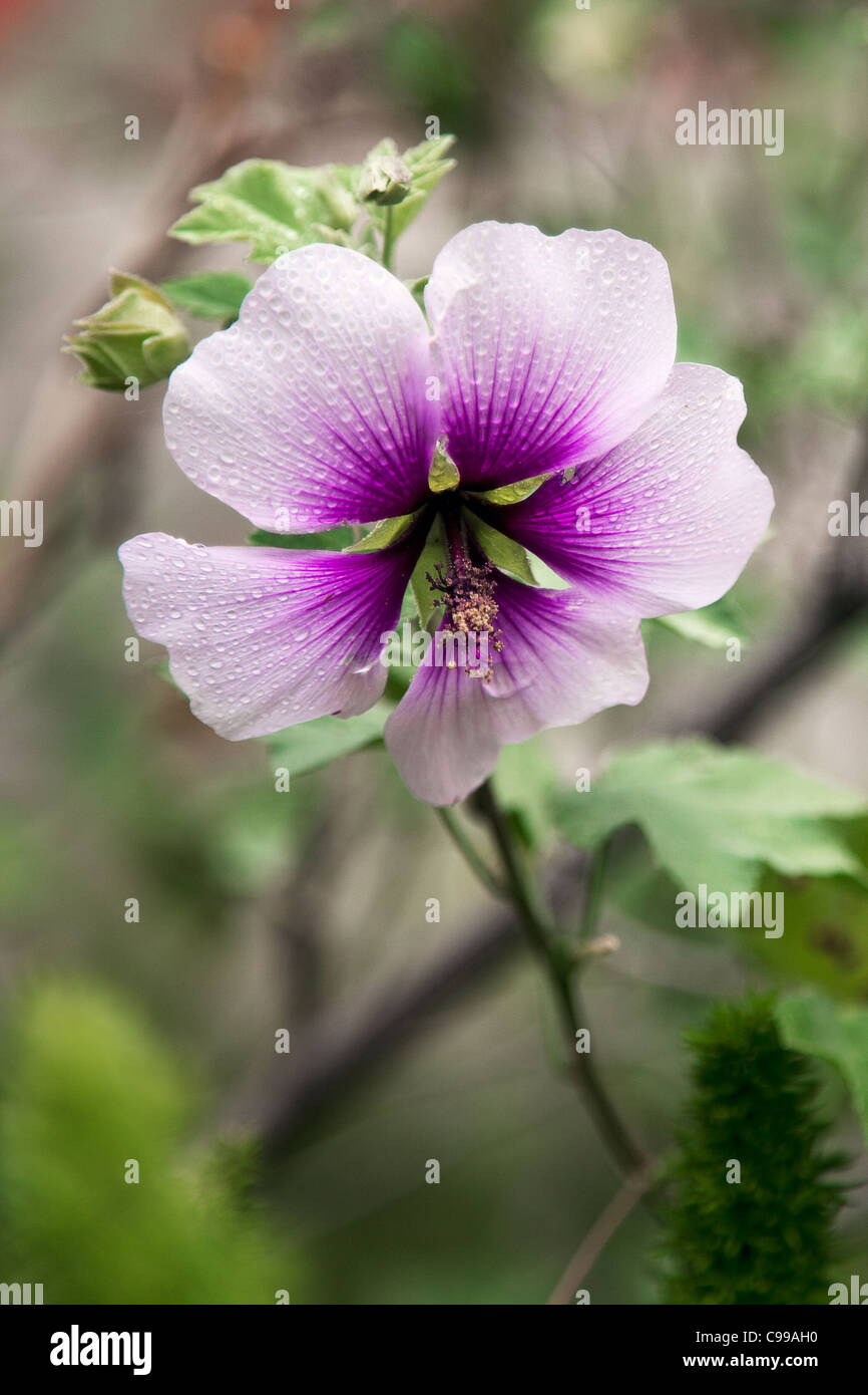 White Flower With Purple Center Stock Photos White Flower With